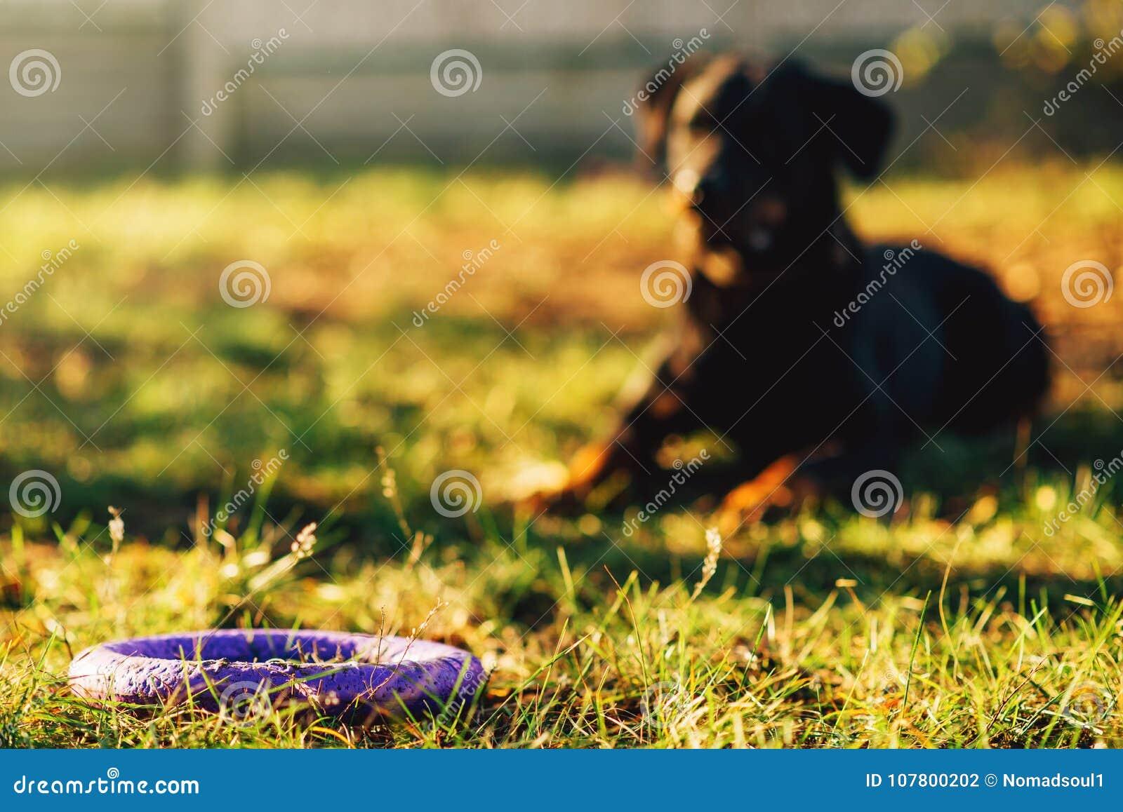 Ausgebildeter Wachhund