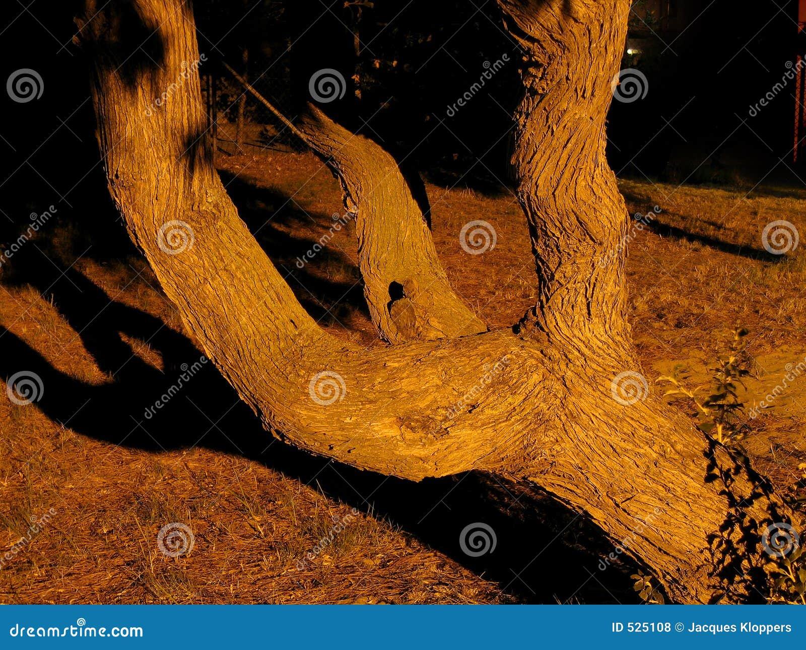 Ausgebreiteter Baum
