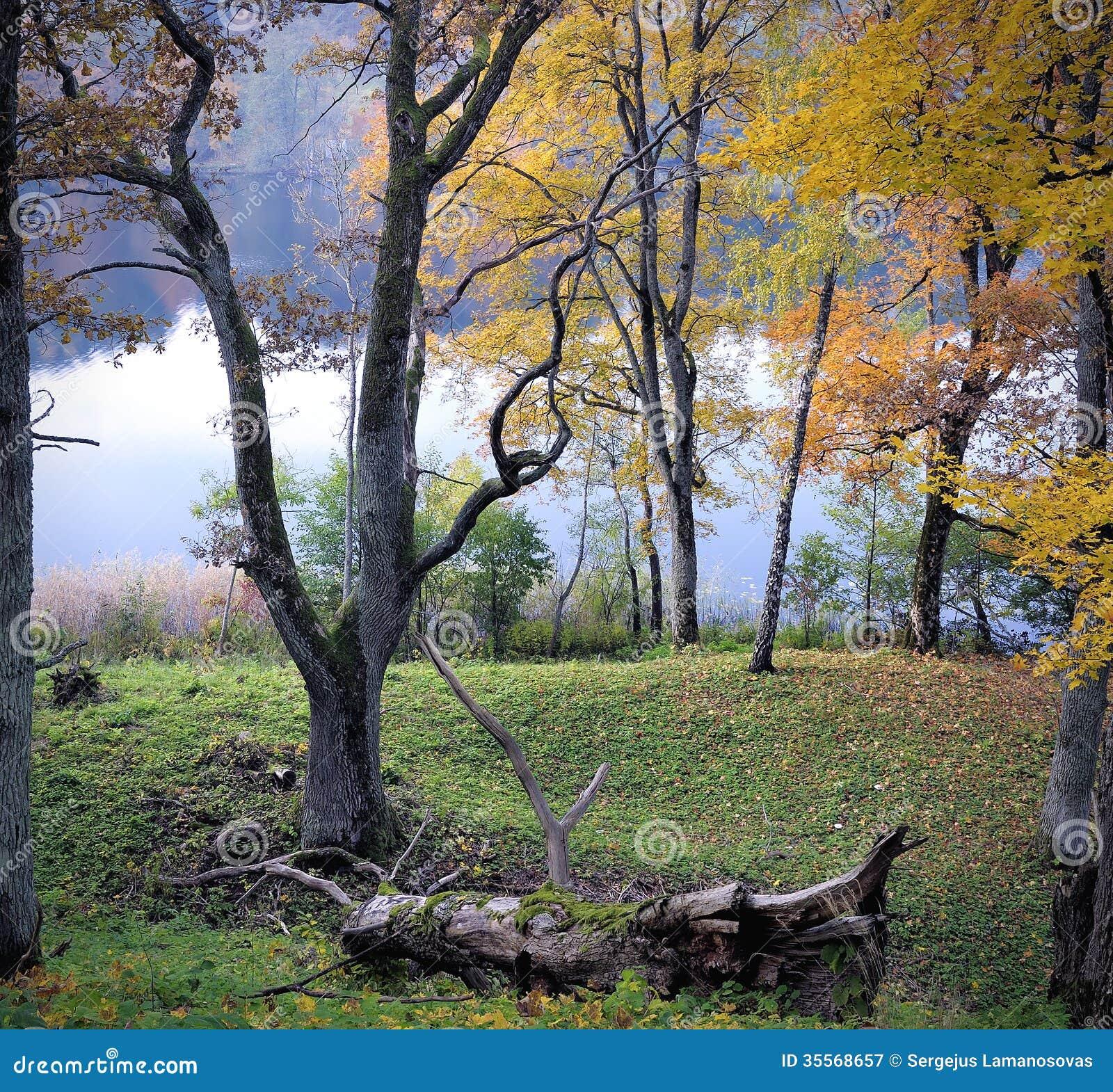 Ausgereifter Herbst