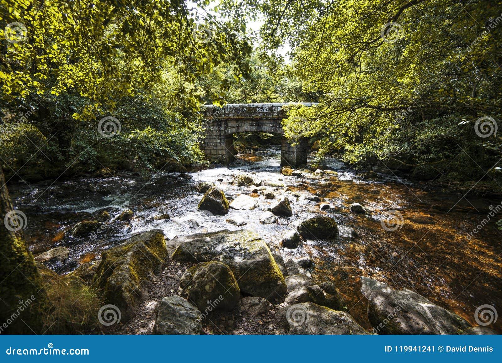 Ausgezeichnete Waldlandschaft in Dewerstone-Holz auf dem Südrand von Dartmoor, Devon, England