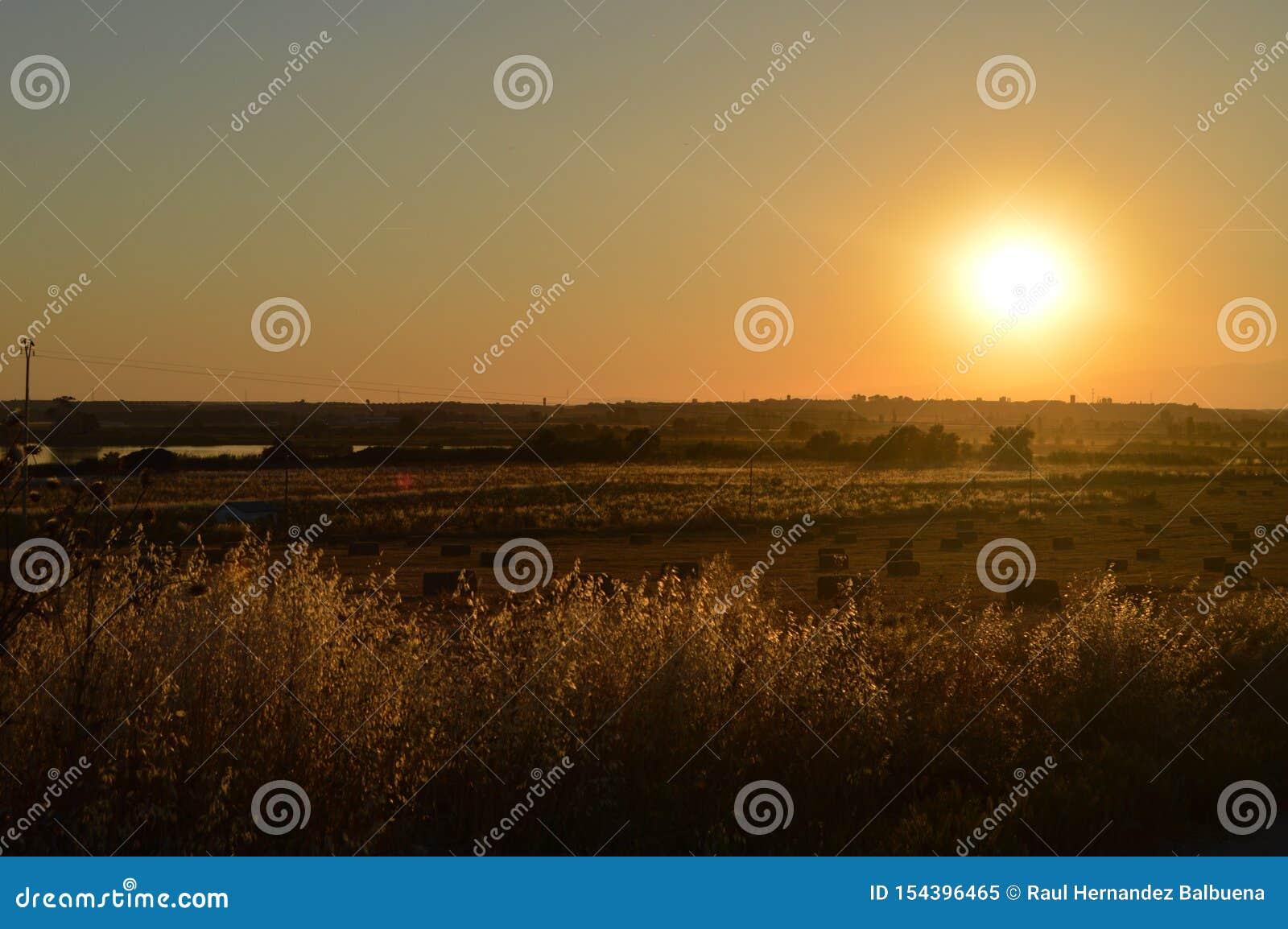 Ausgezeichneter Sonnenuntergang auf einem eben gemähten Strohgebiet voll von Alpakas nahe bei dem Tajo in der Erbschaft Am 15 las