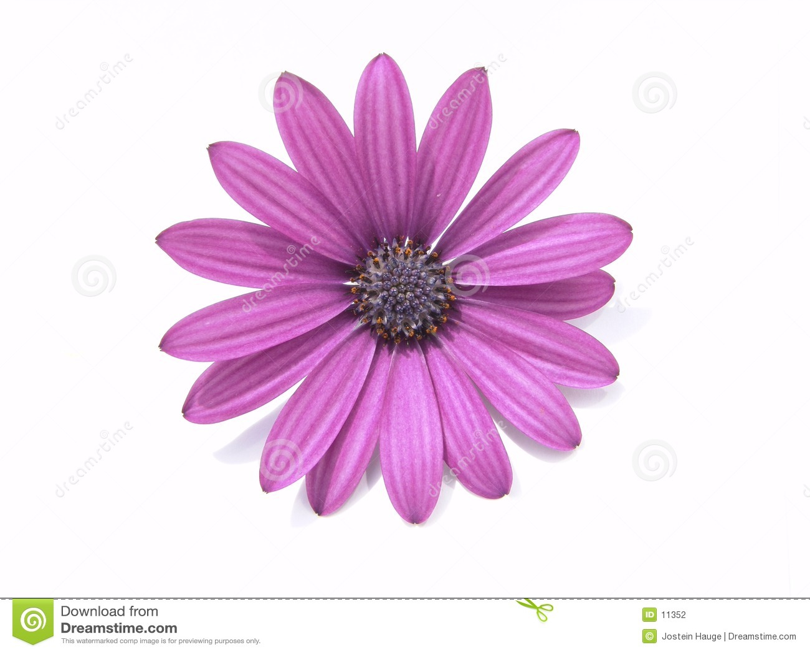 Auslegung-Elemente: Blumen-Kopf