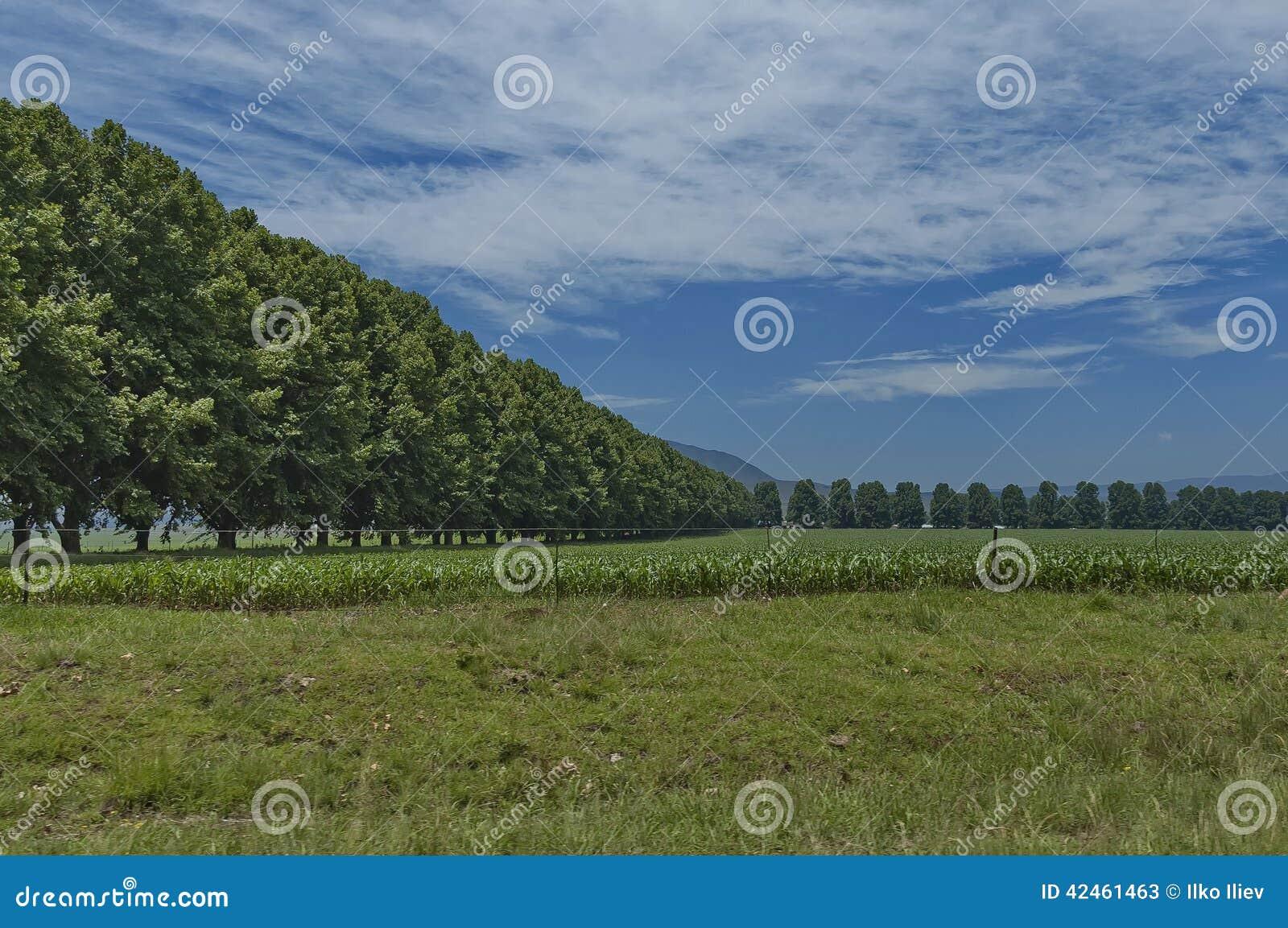 Aussaatfläche im Kwazulu Natal Naturreservat