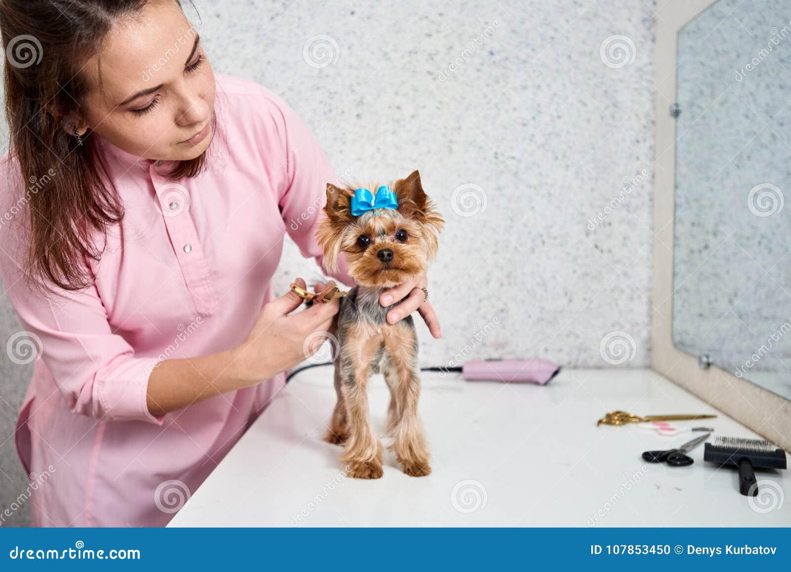 Ausschnitthund-` s Haar
