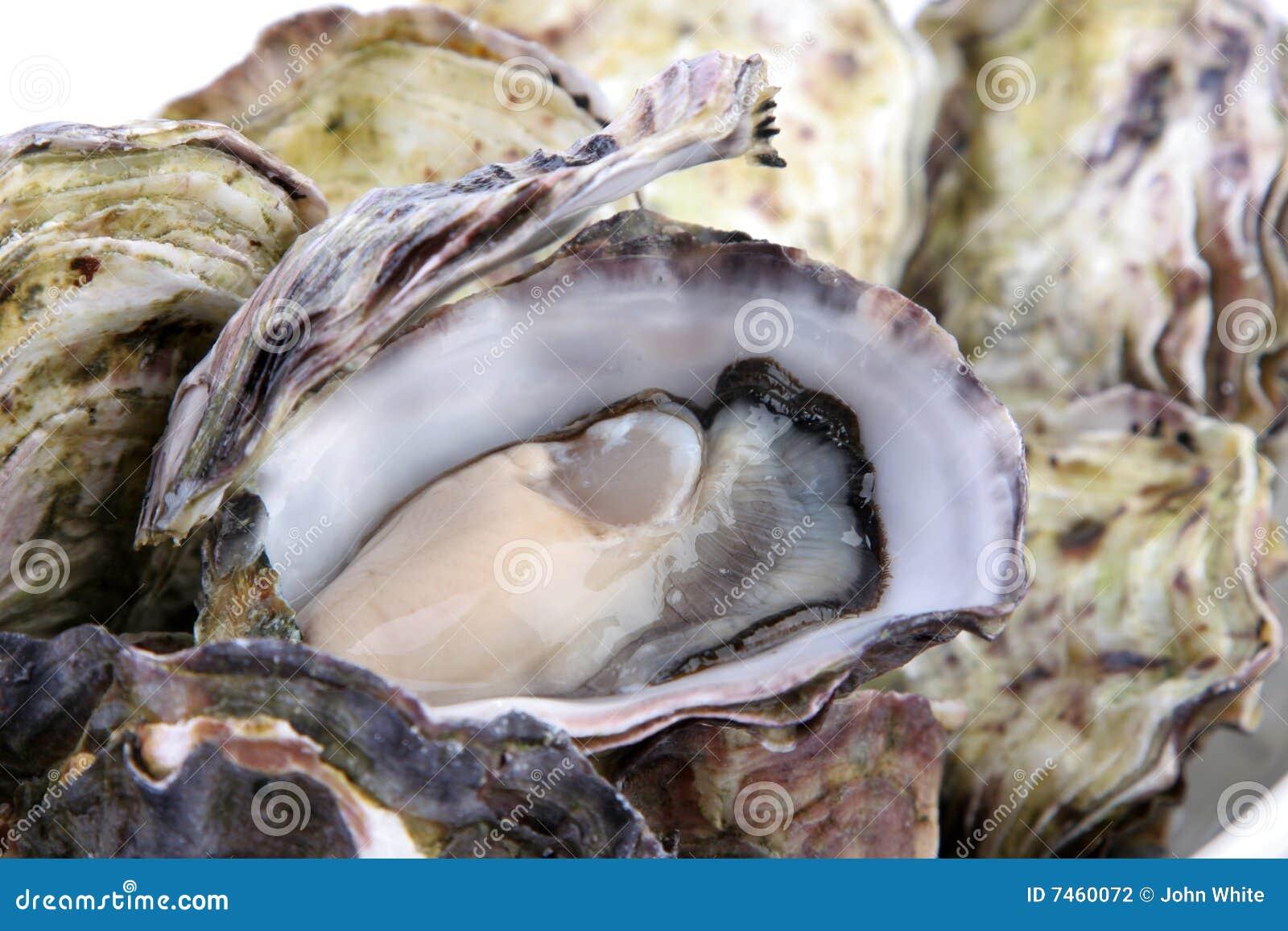 Auster im Shell