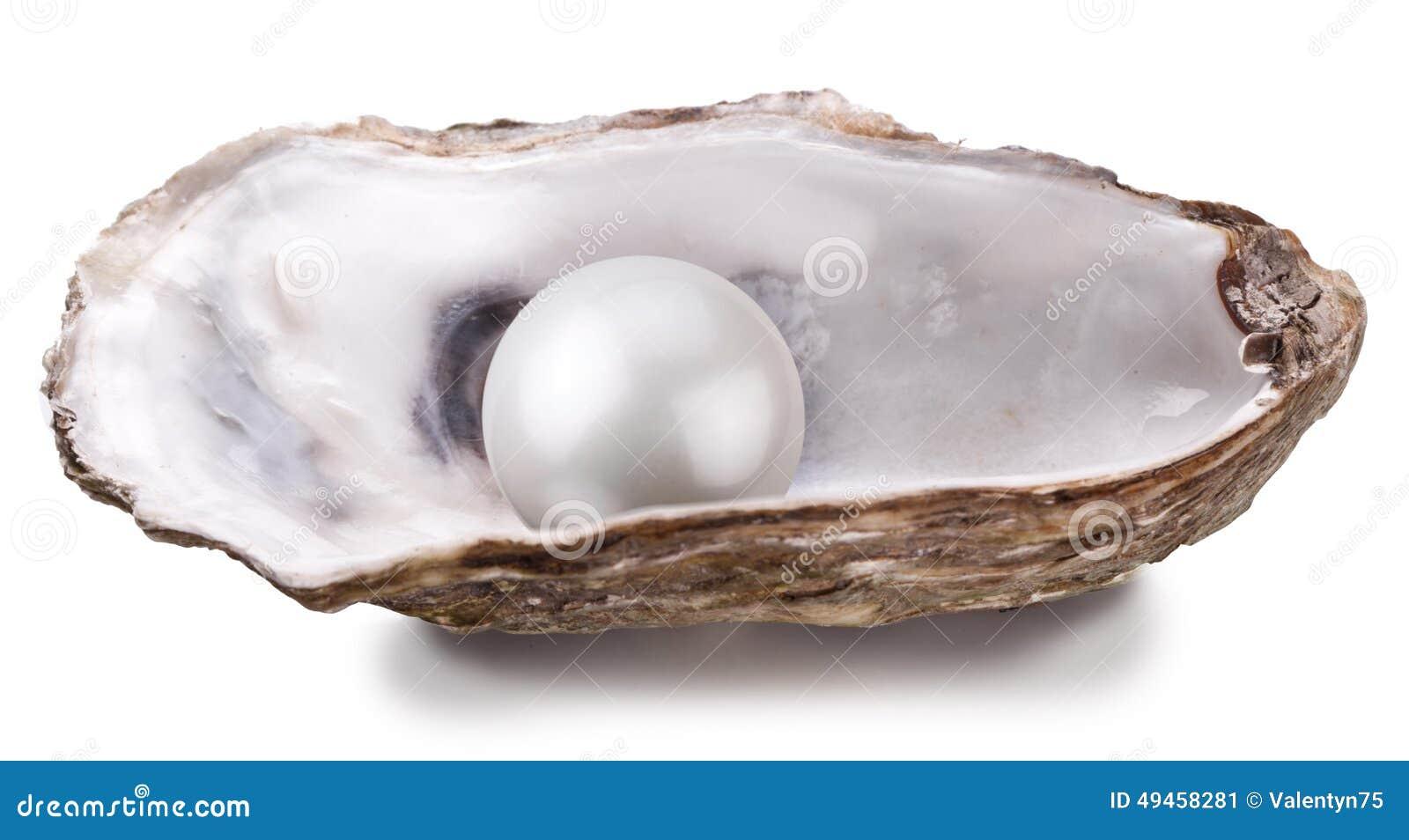 Auster mit der Perle lokalisiert