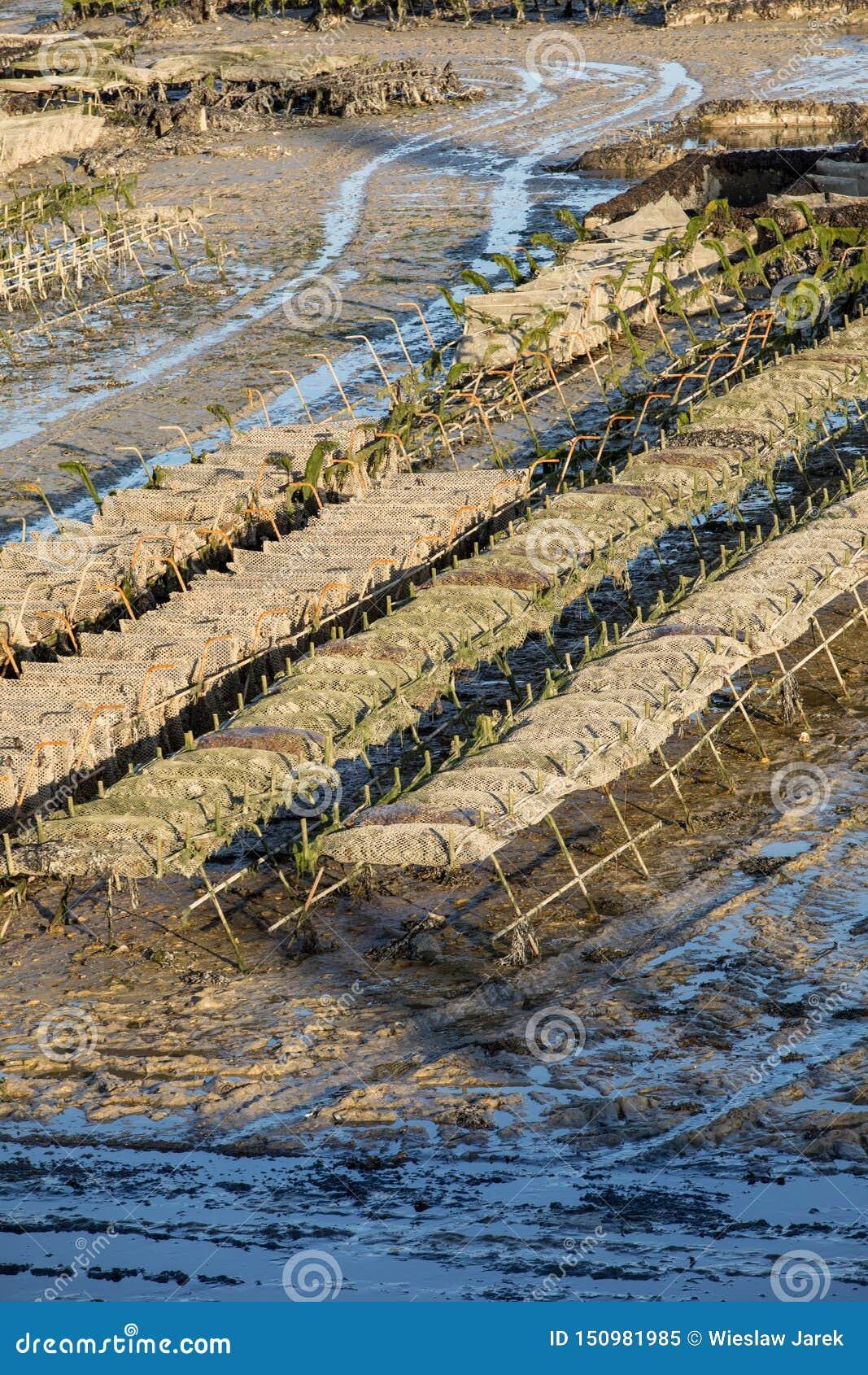 Austernbanken bei Ebbe im Austernbauernhof, Cancale, Bretagne, Frankreich