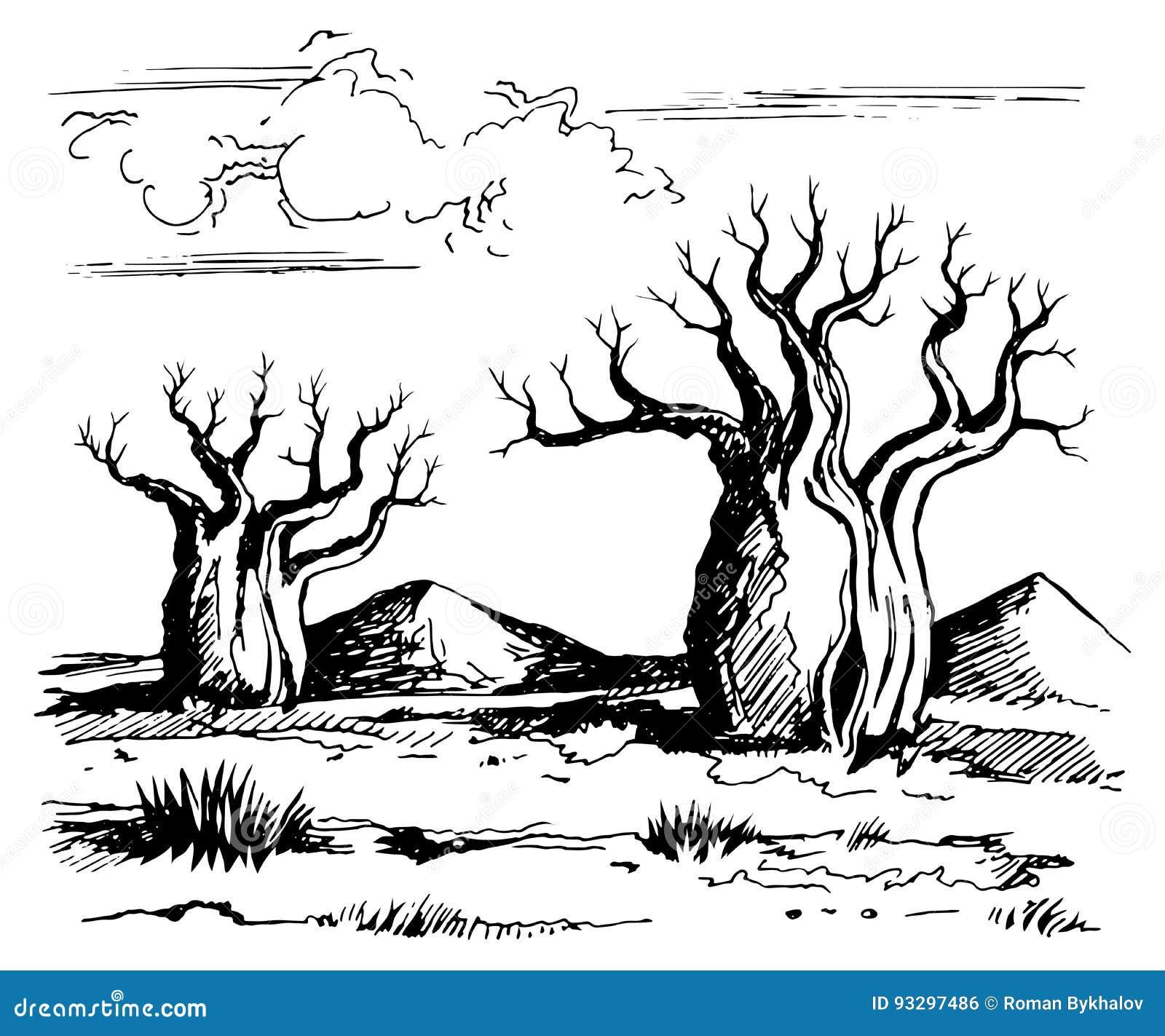 baobab cartoons  illustrations  u0026 vector stock images