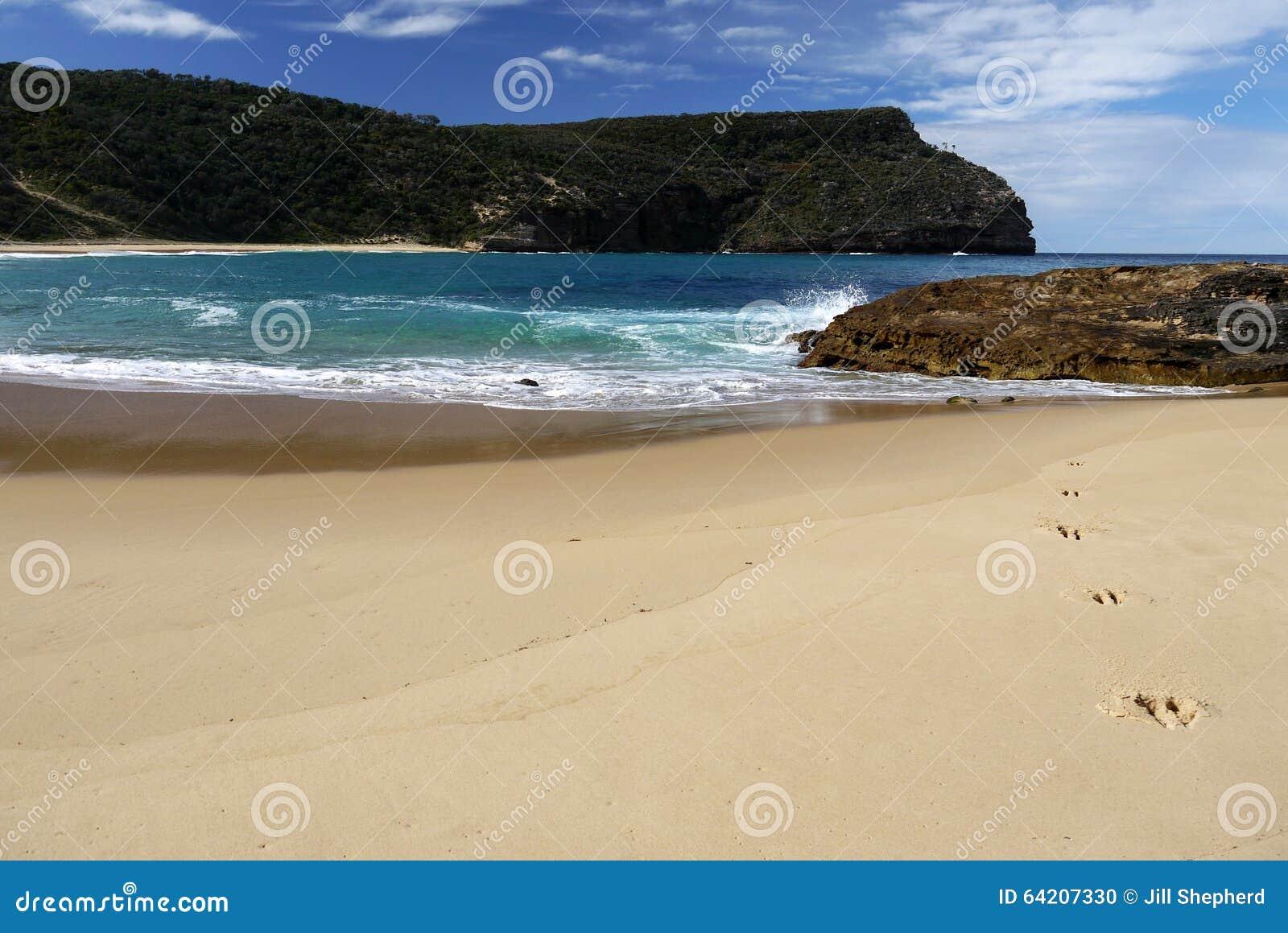 Australia: pistas del canguro en la playa h