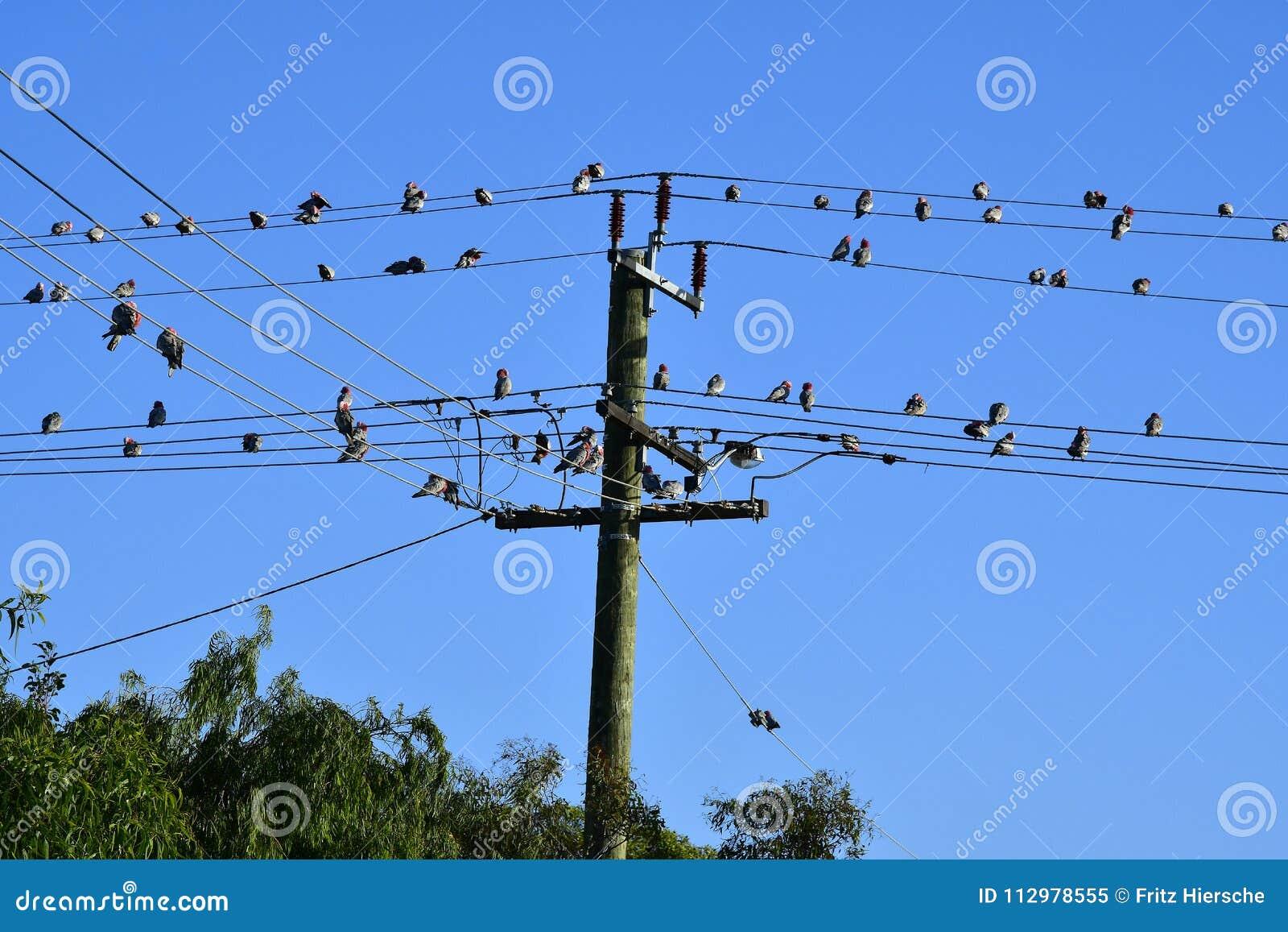 Australia, WA, Kalbarr, Birds