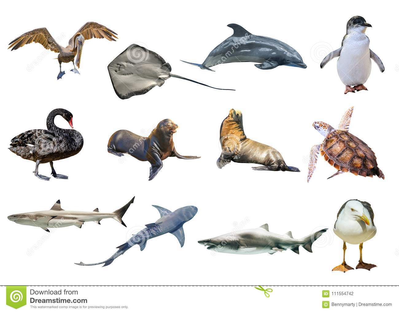 further Australian Animals Collage Isolated White Background Pelican Seagull Penguin Black Swan Lemon Shark Sting Ray Great Sea likewise Af D E Z together with Vg Lg further Antc V. on shark color by number