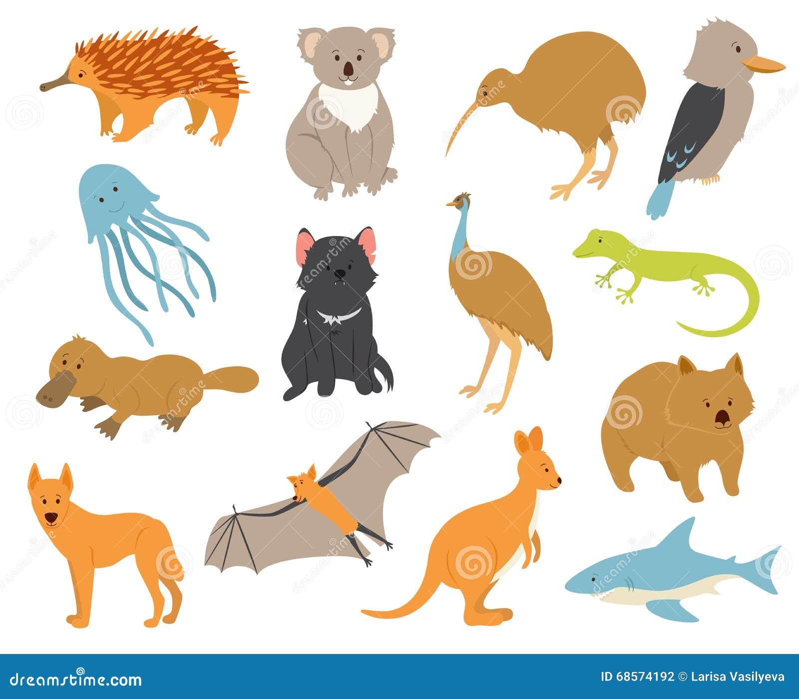 Australian Animals Set Stock Vector Illustration Of
