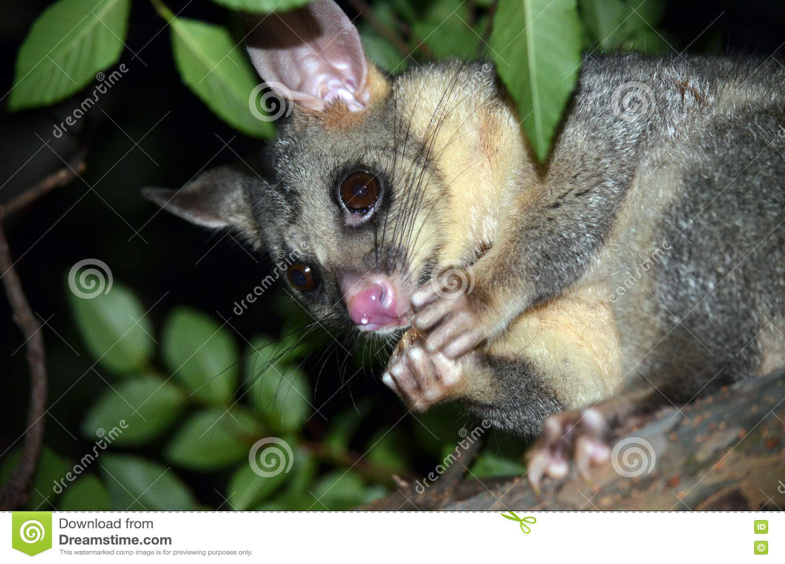 possum in backyard home decorating ideas
