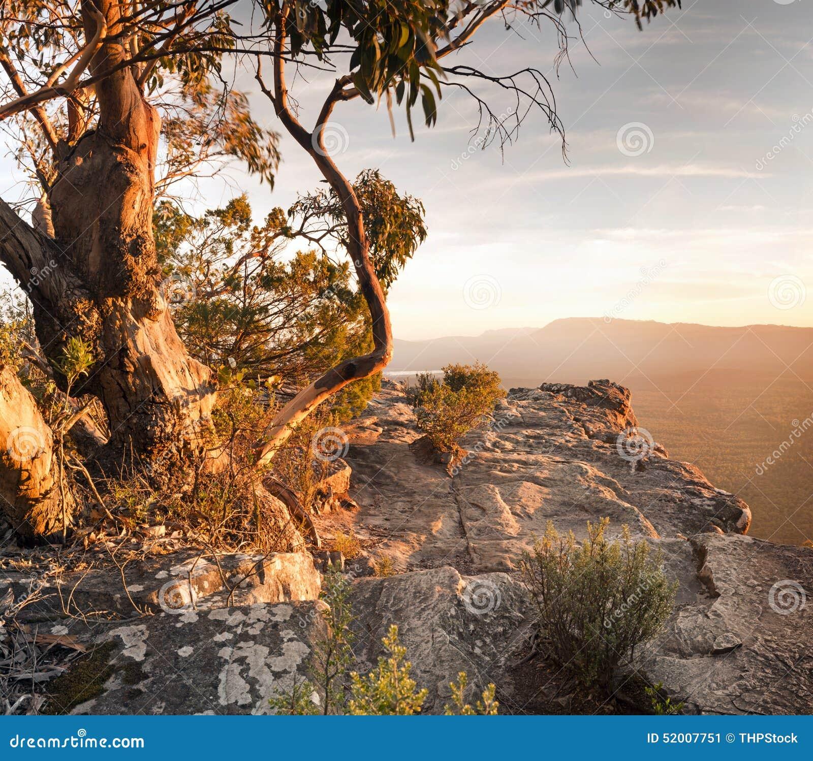 australian bush landscape stock photo image 52007751