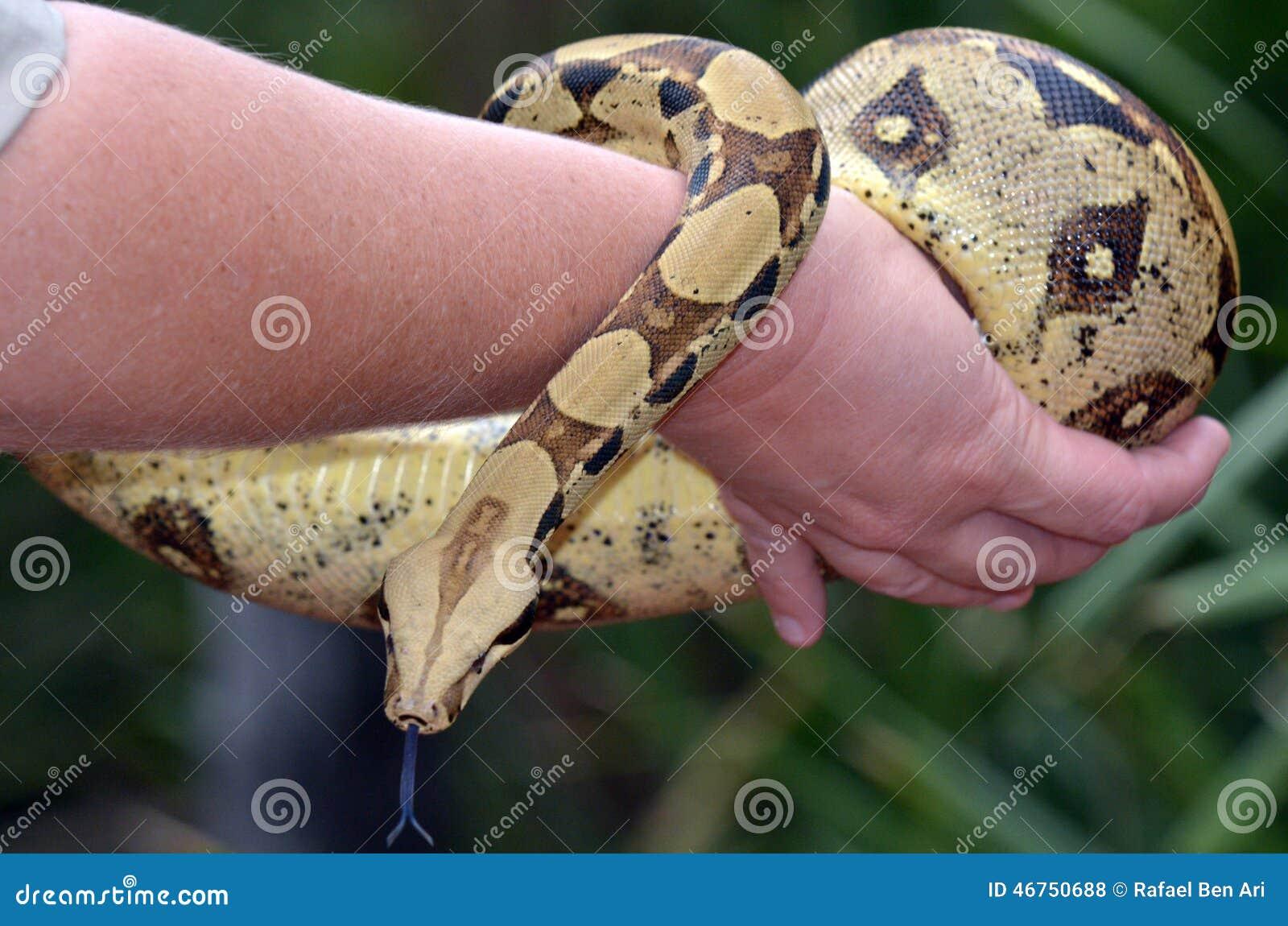 Python current date in Australia