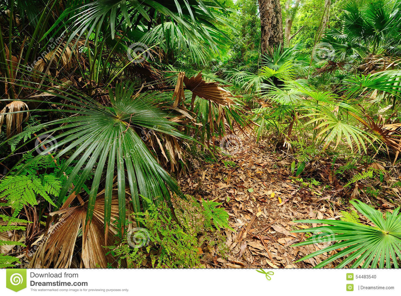 Australian bush forest with green trees and plants.