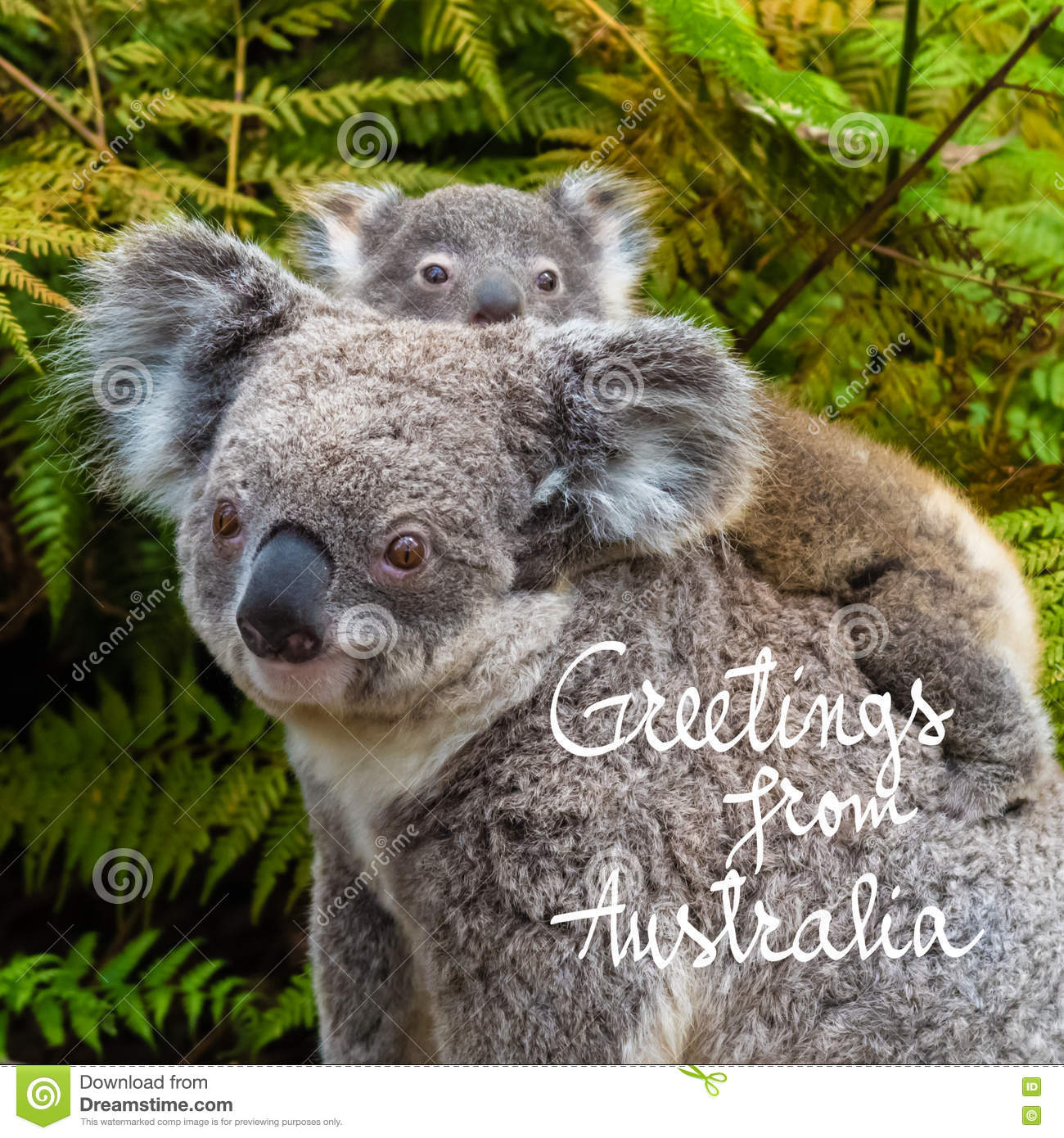 Australian koala bear native animal with baby and greetings from download australian koala bear native animal with baby and greetings from australia text stock illustration m4hsunfo