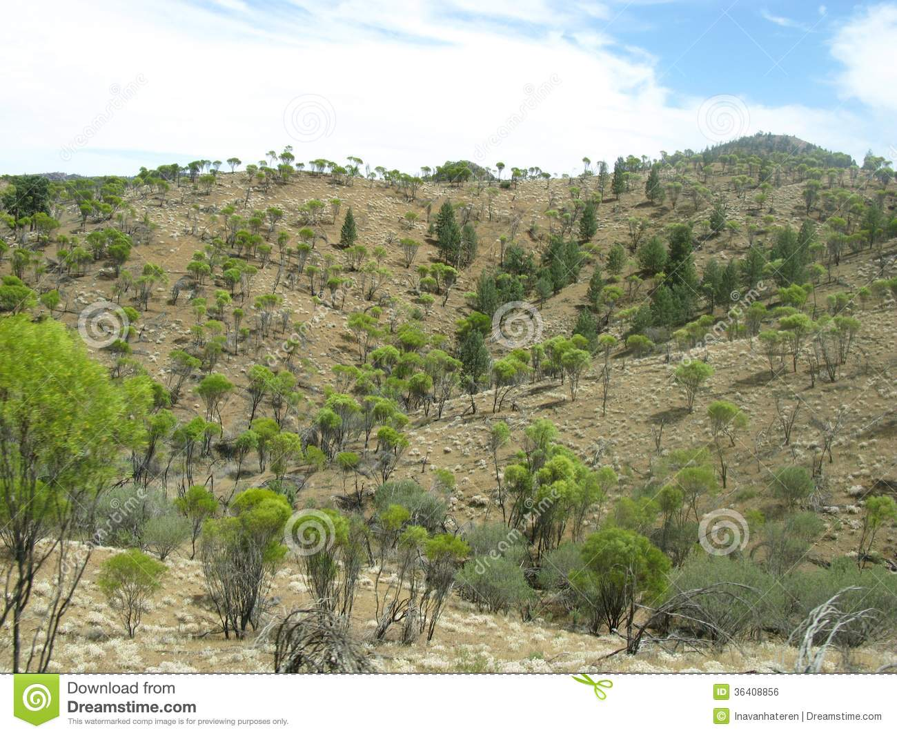 Australian landscape royalty free stock image image for Landscapers adelaide western suburbs
