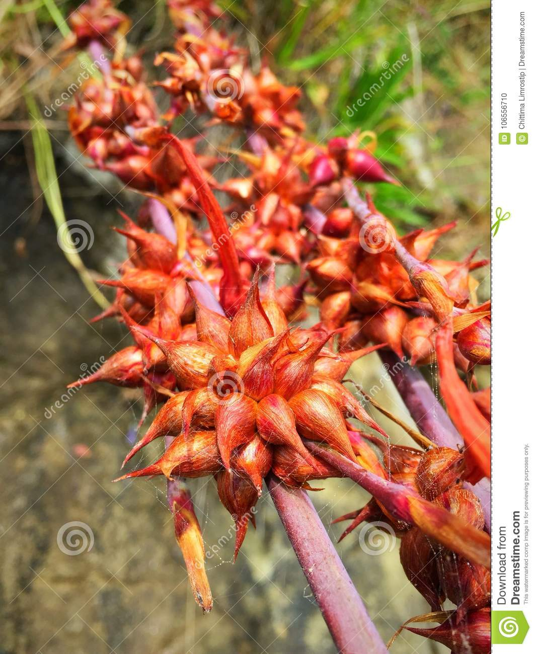 Australian Native Plants And Flowers Stock Photo Image Of