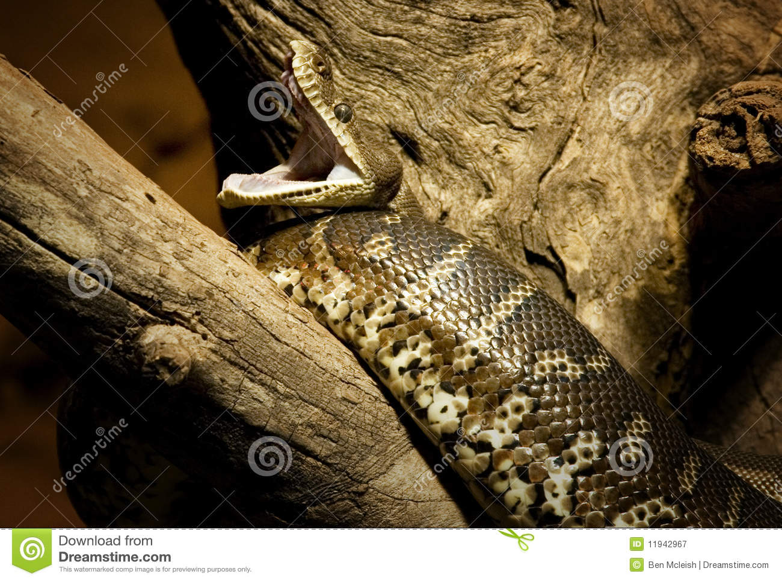 Python current date in Sydney