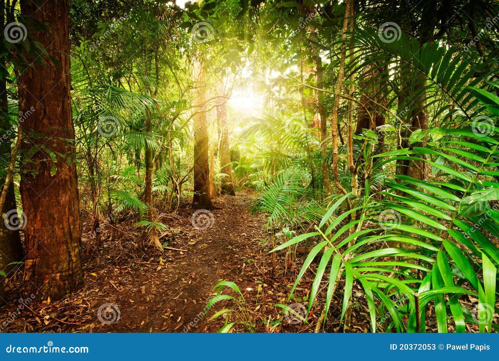 In australian rainforest stock photos image 20372053 for Australian rainforest
