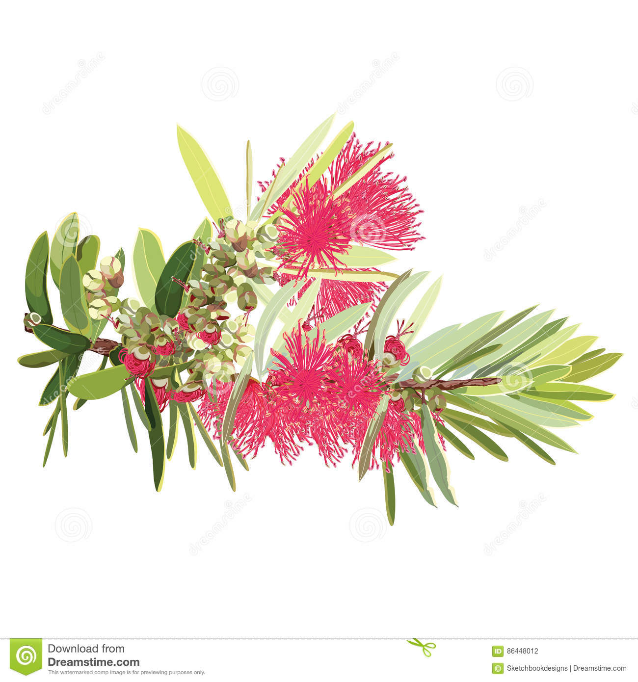 Bottlebrush Cartoons, Illustrations & Vector Stock Images