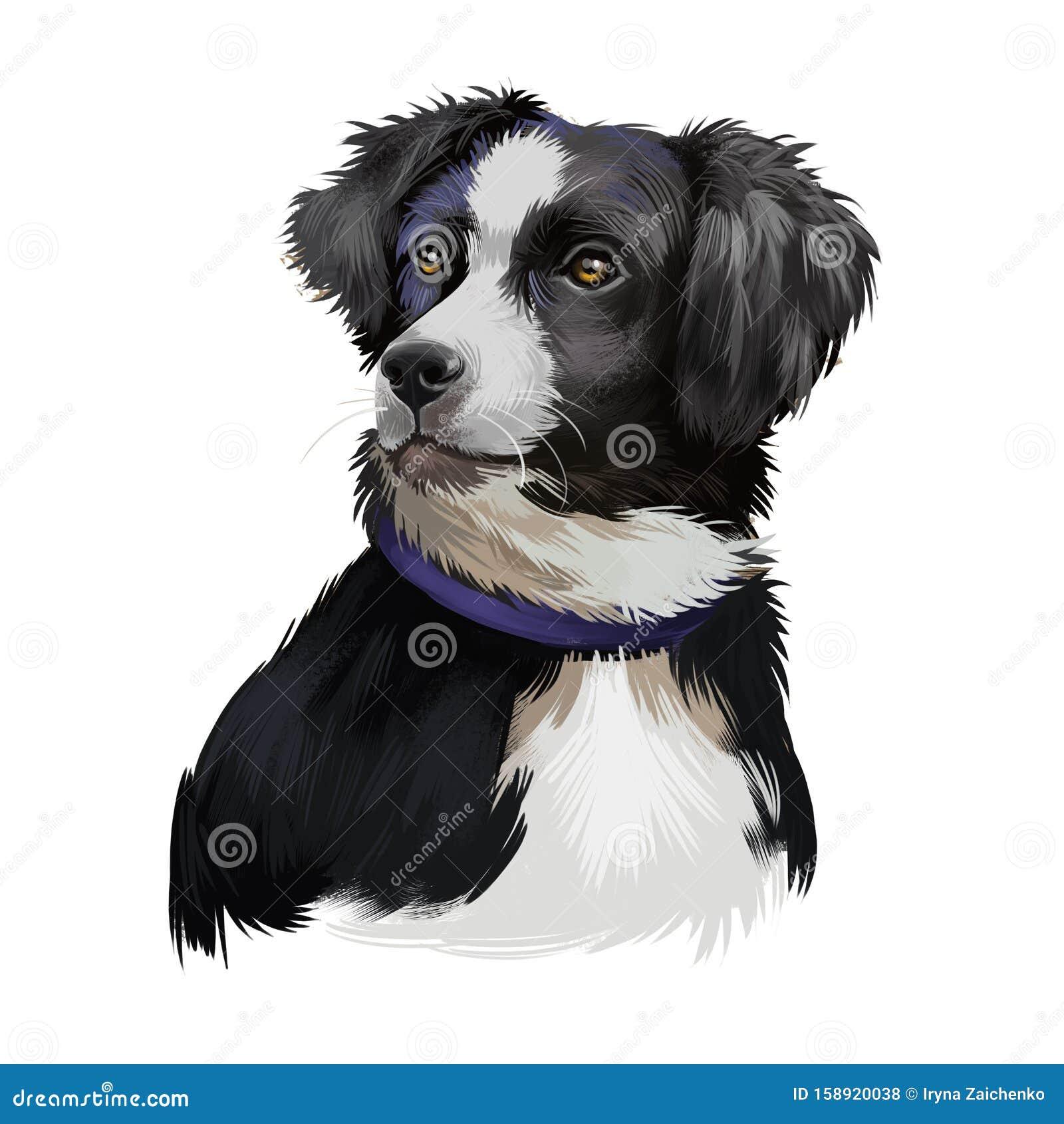 Australian Shepherd Dog Breed Digital Art Illustration Isolated On White Aussie Medium Sized Breed Of Dog Of Black And White Stock Illustration Illustration Of Digital Friend 158920038