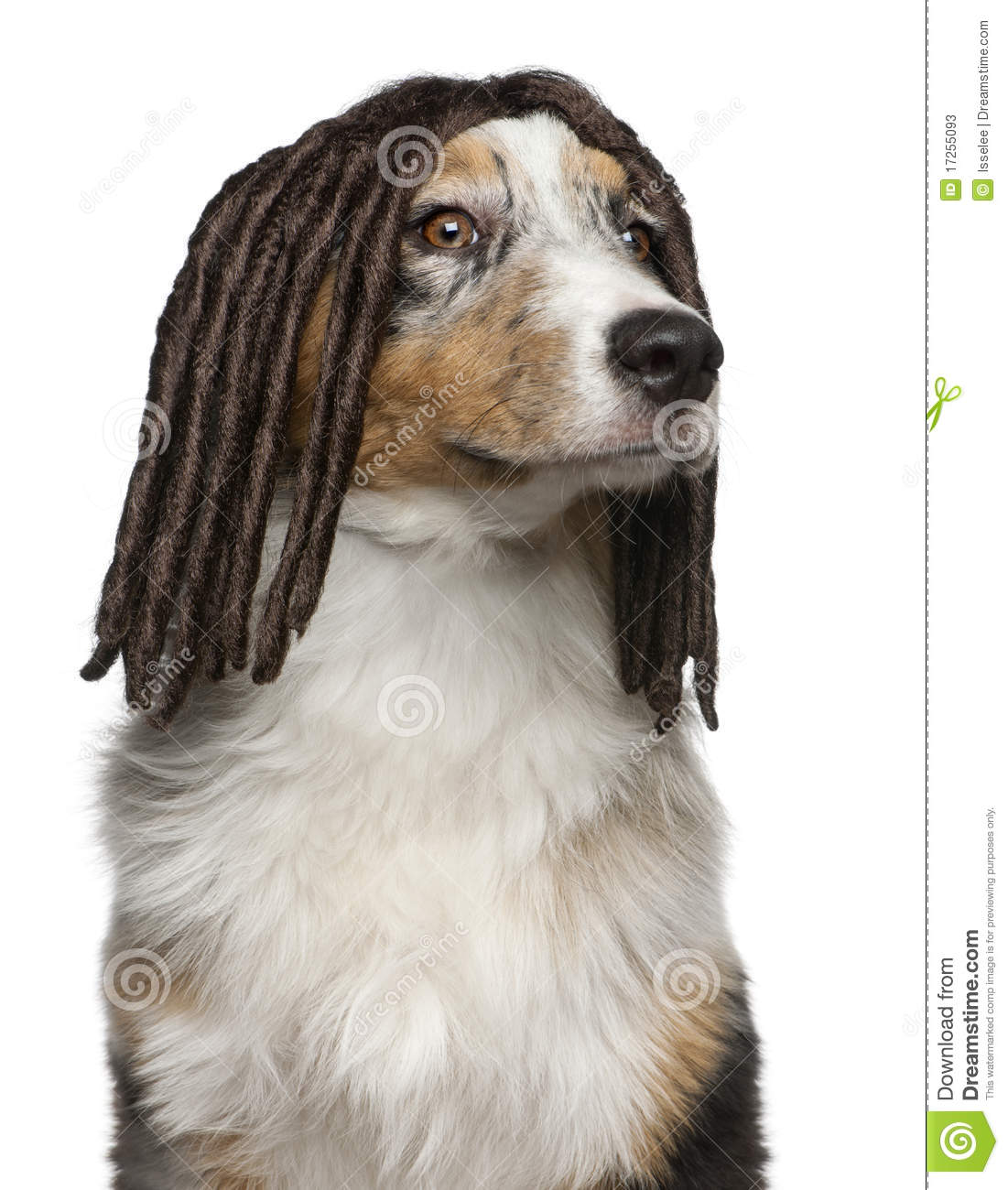 Dogs with Wigs