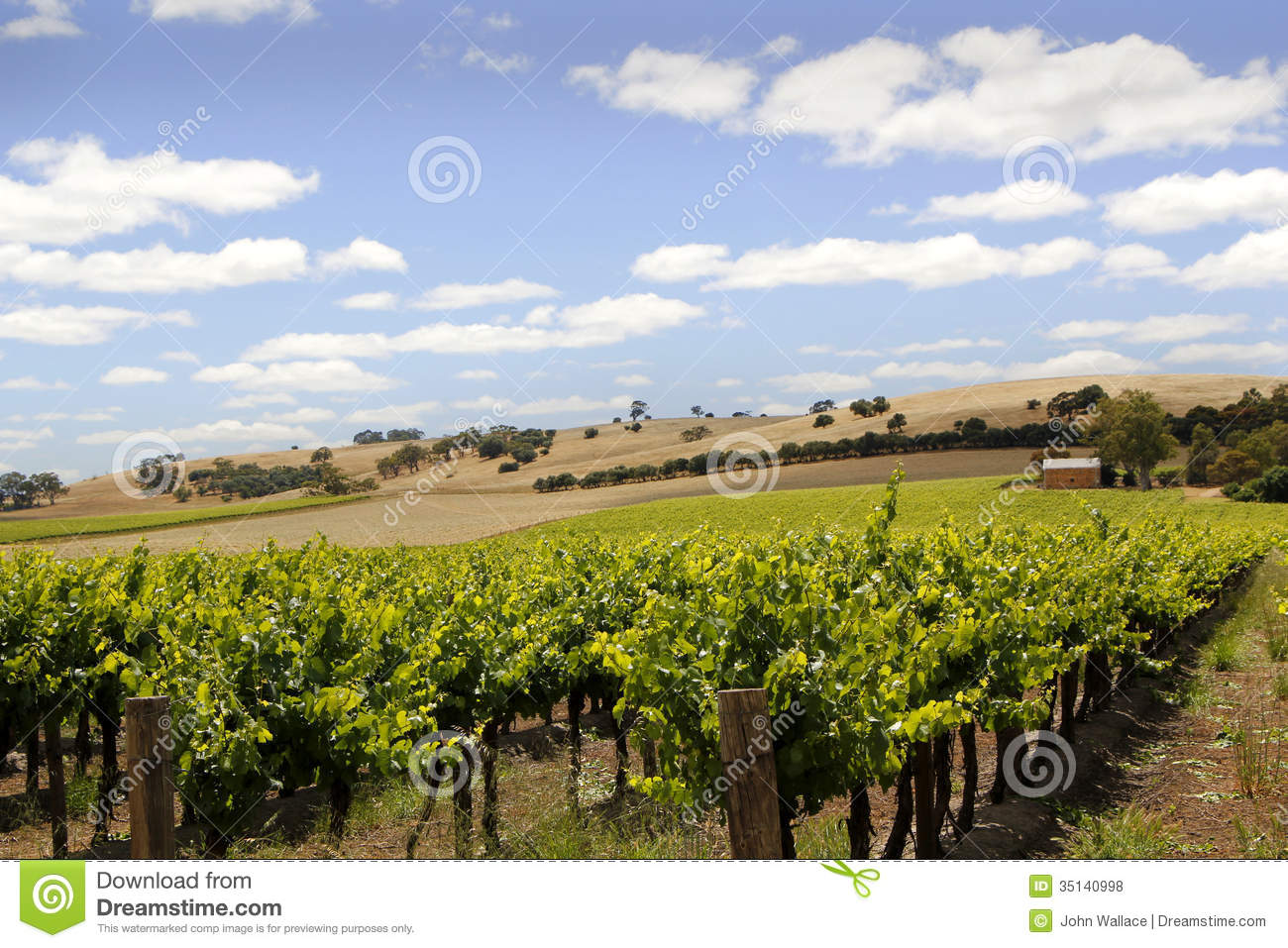 Australian vineyard landscape royalty free stock photos for Landscapers adelaide south