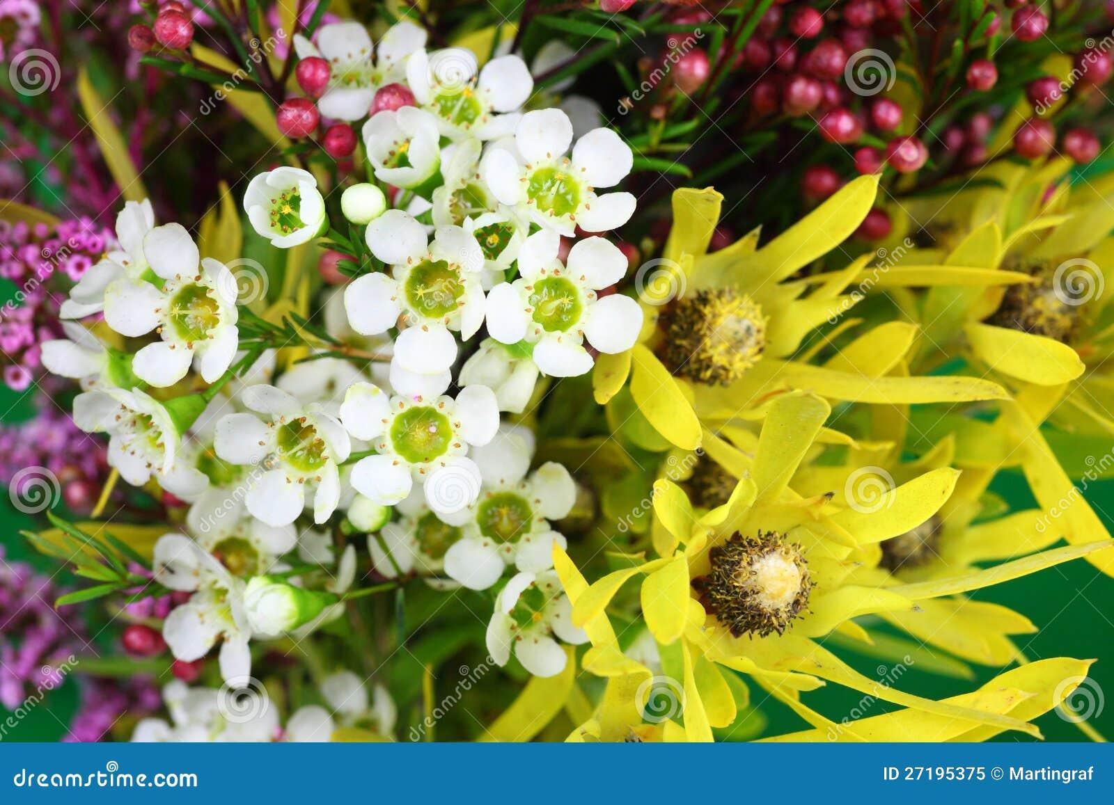 Australiensiska infödda blommor