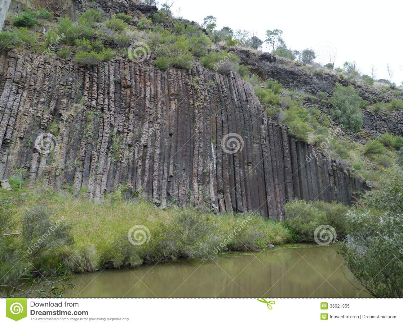 Australijski organowych drymb park narodowy