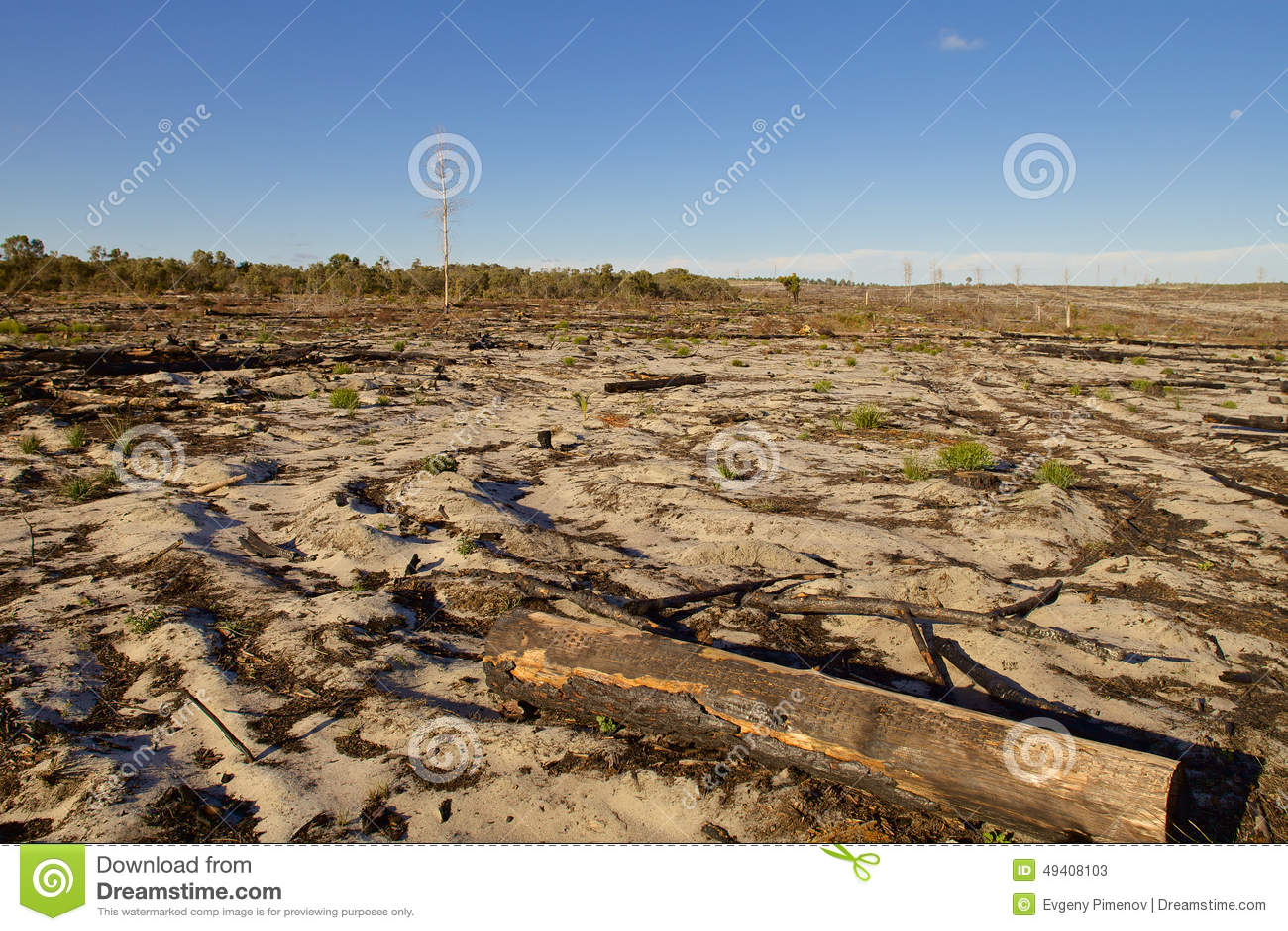Download Australische Landschaft Am Sonnigen Tag Stockbild - Bild von trocken, blau: 49408103