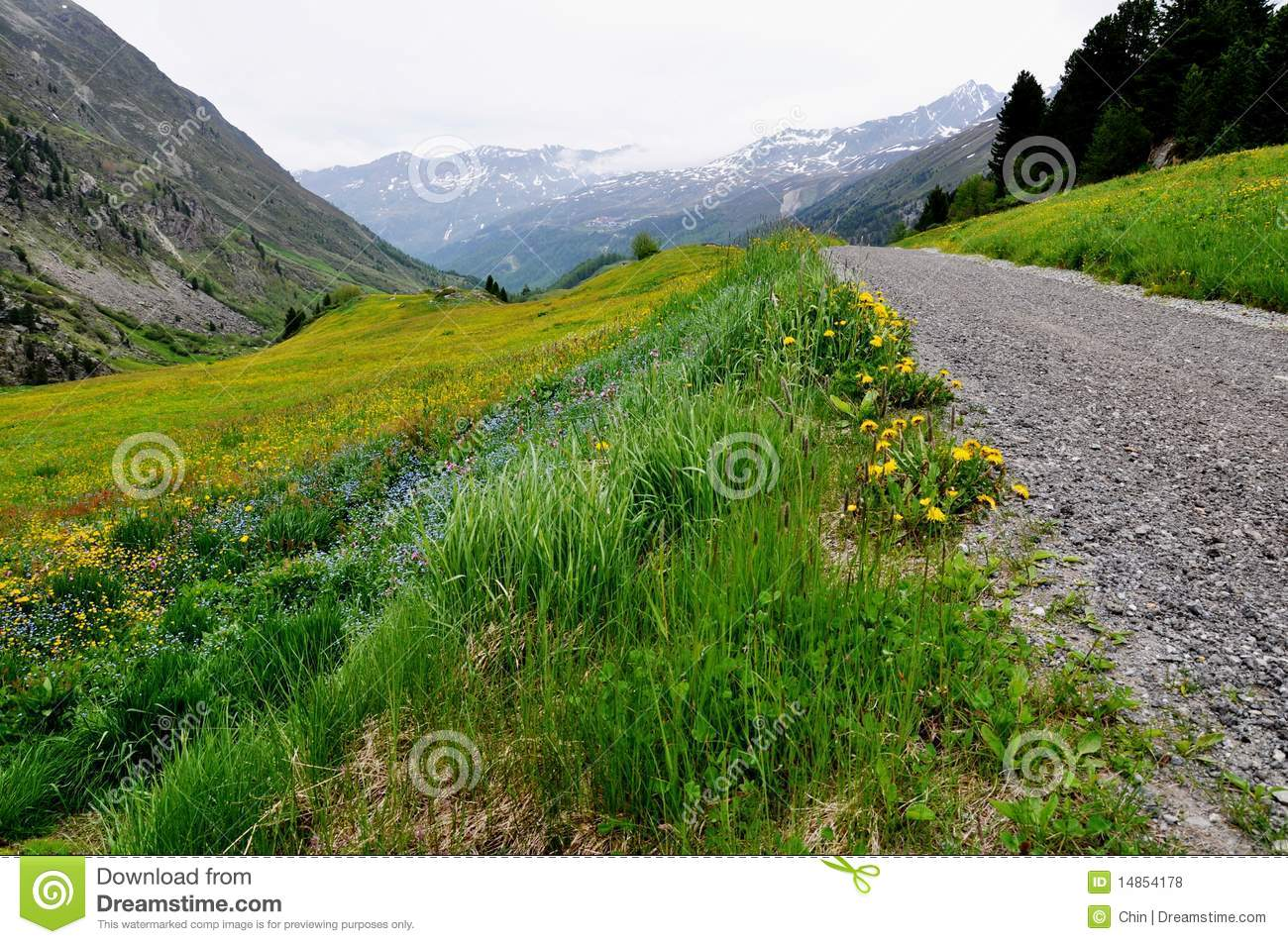 Austrian Landscape with colourful flower meadow