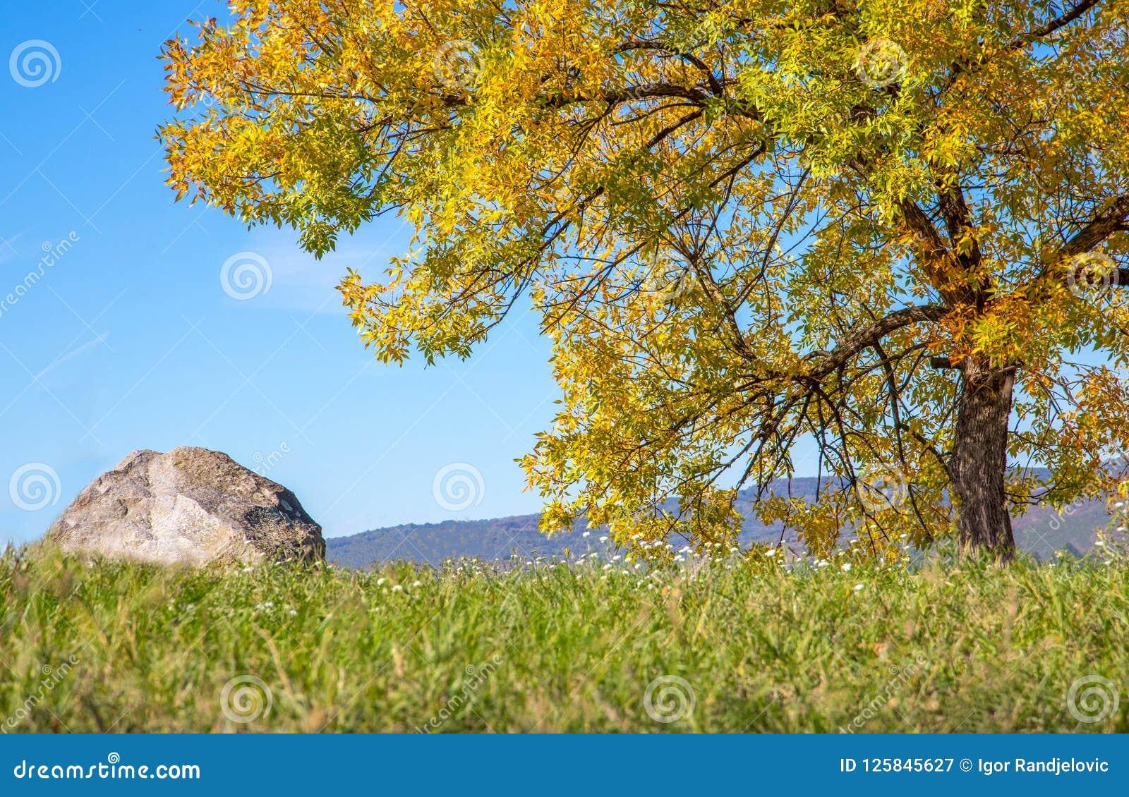 Autmn-Baum und der Stein