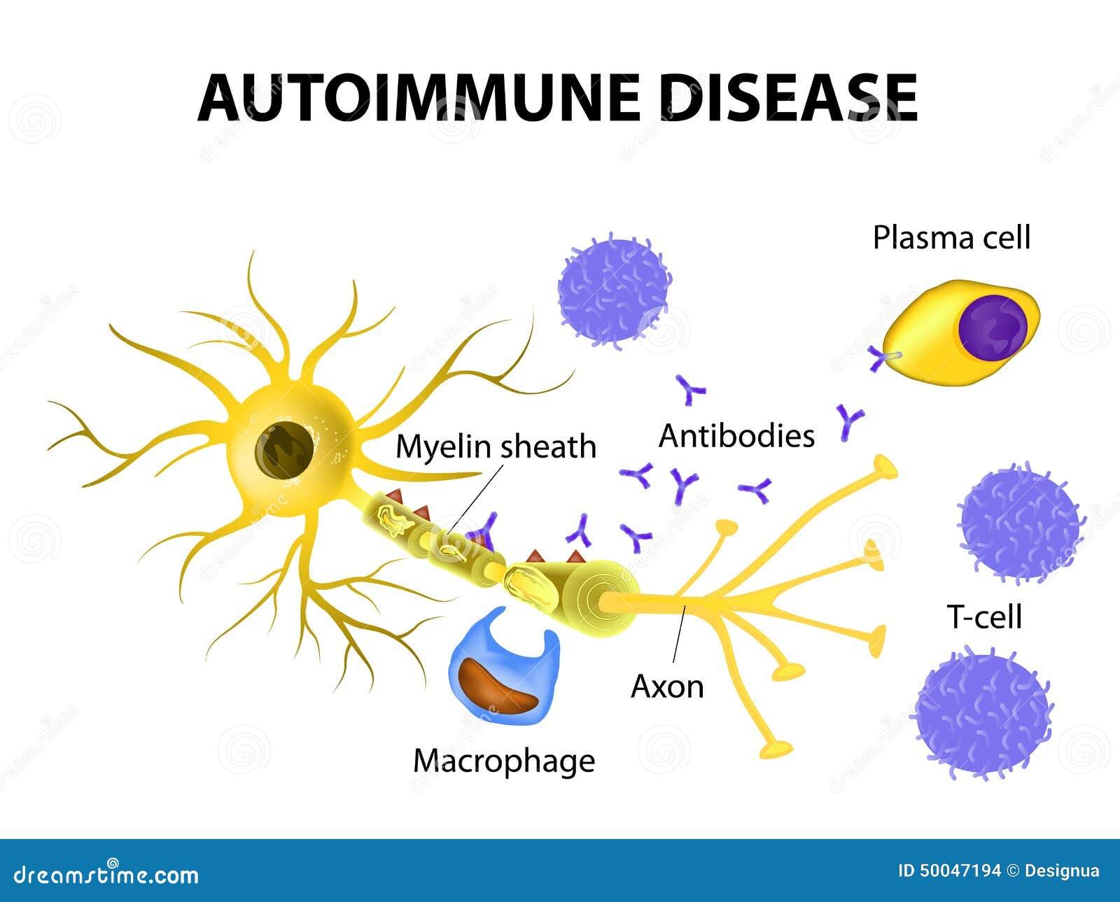 1300 x 1064 jpeg 114kBOligodendrocytes