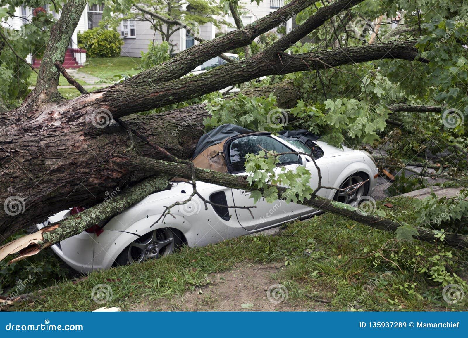 Auto zerquetscht durch Baum während des Sturms