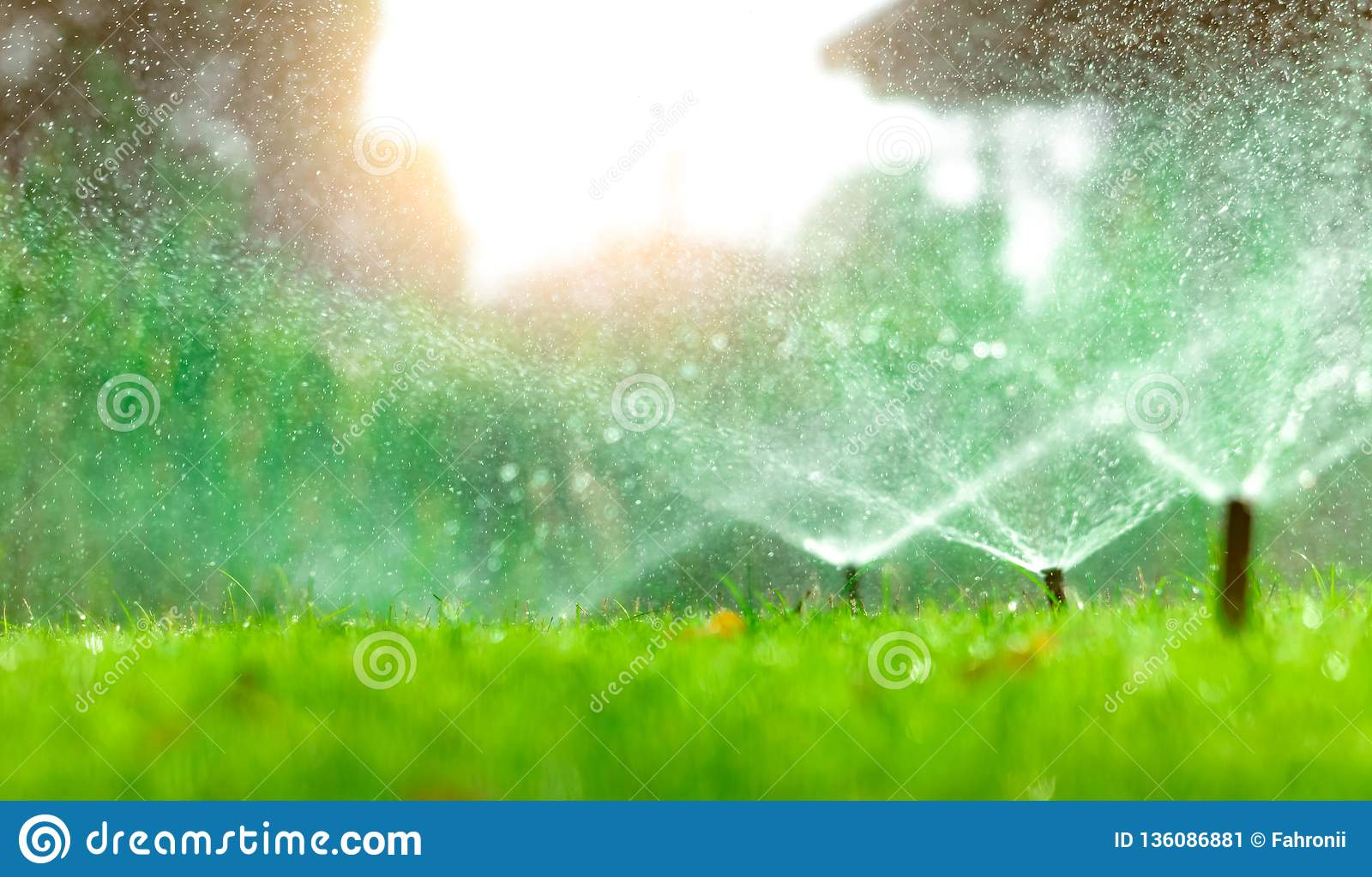 Automatic lawn sprinkler watering green grass. Sprinkler with automatic system. Garden irrigation system watering lawn. Water