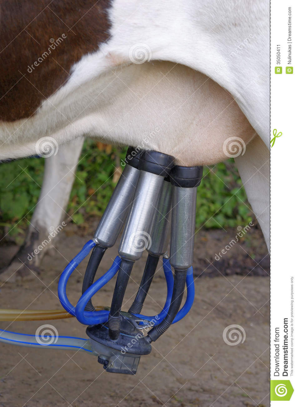 More similar stock images of ` Automatic milking machine, datail. `