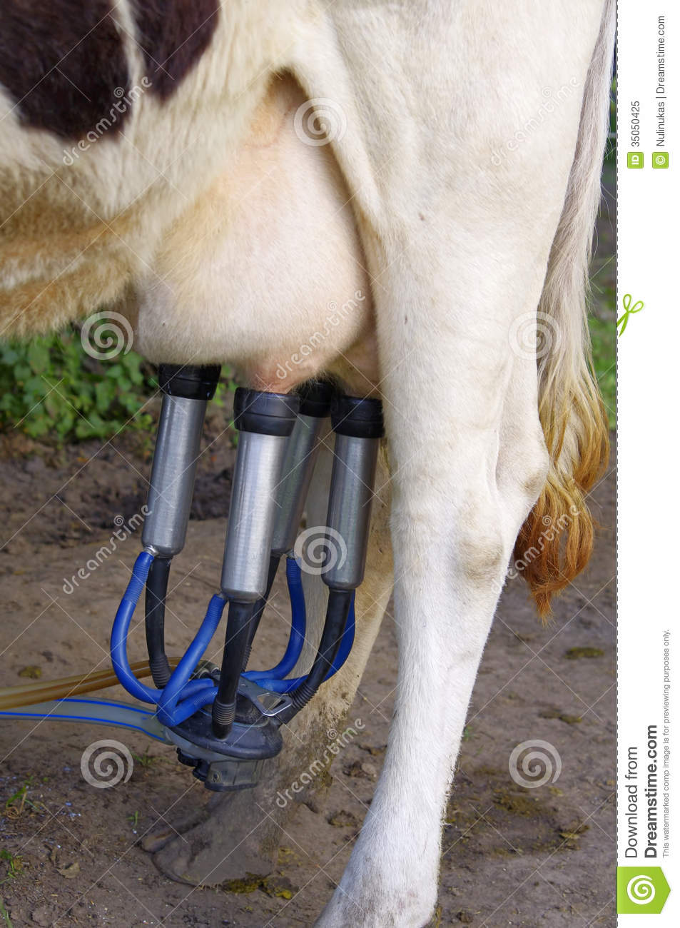 got milking machines essay The effectiveness of a milking machine lies in its efficient functioning, cleaning  and correct application and removal  in summary  since liners are the parts  of the machine that get into direct contact with the cow during.