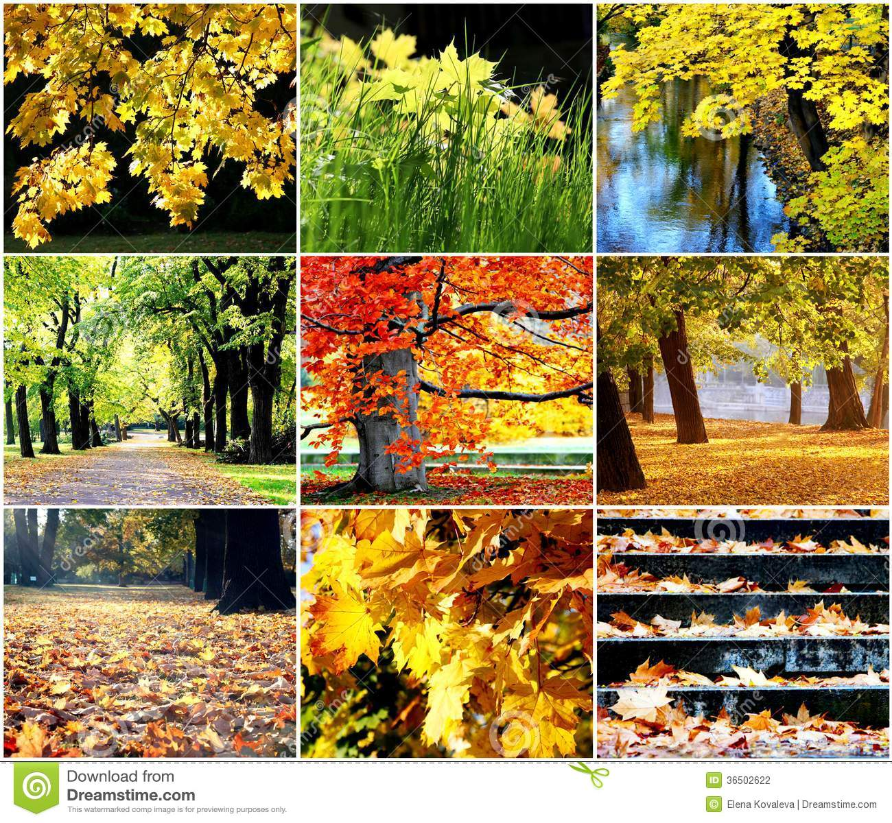 Automne d or
