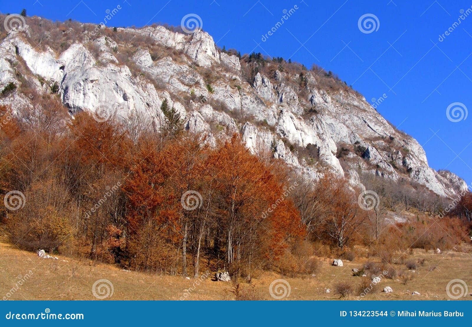 Automne dans des gorges de Rasnoave, comté de Brasov