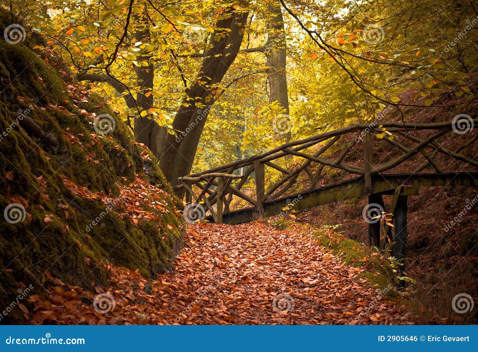 Automne dans la forêt