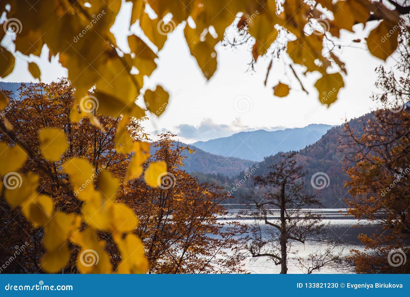 Automne jaune de feuilles au lac Bled en Slovénie en vue d île