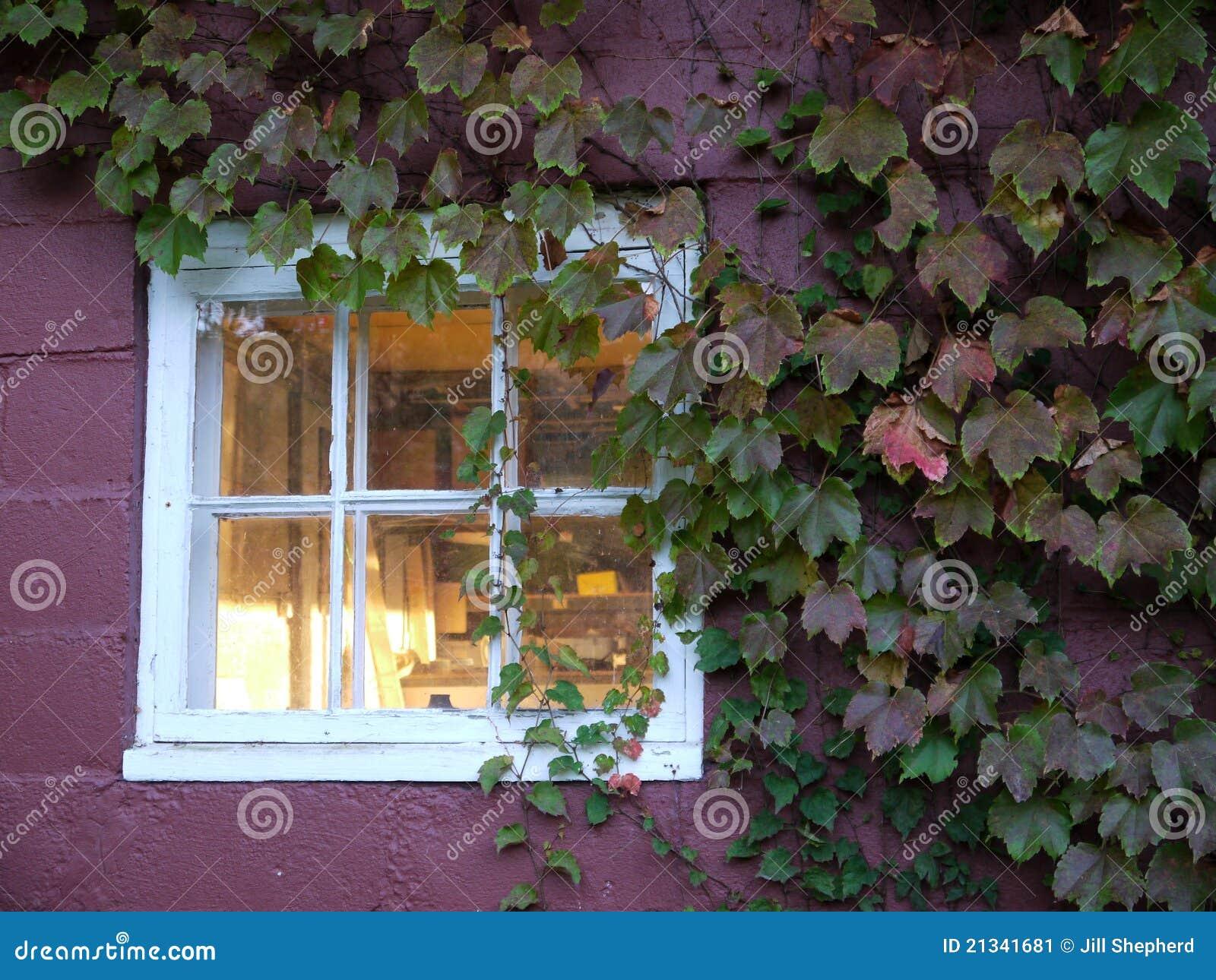 automne plante grimpante autour d 39 hublot dans le mur. Black Bedroom Furniture Sets. Home Design Ideas