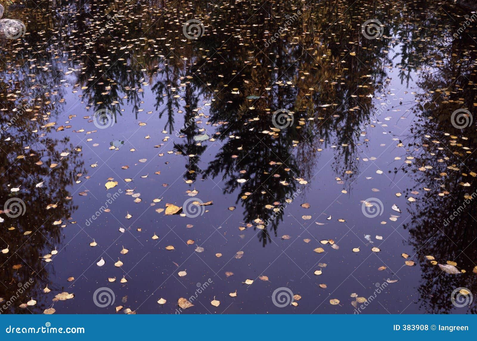 Automnes sur un lac