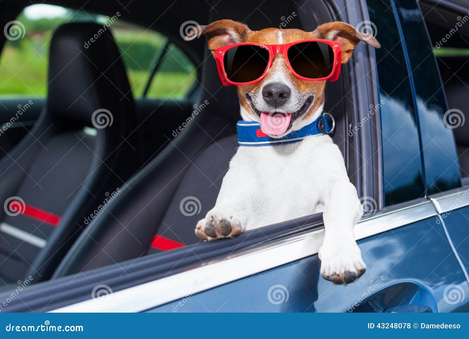Automobile della finestra del cane
