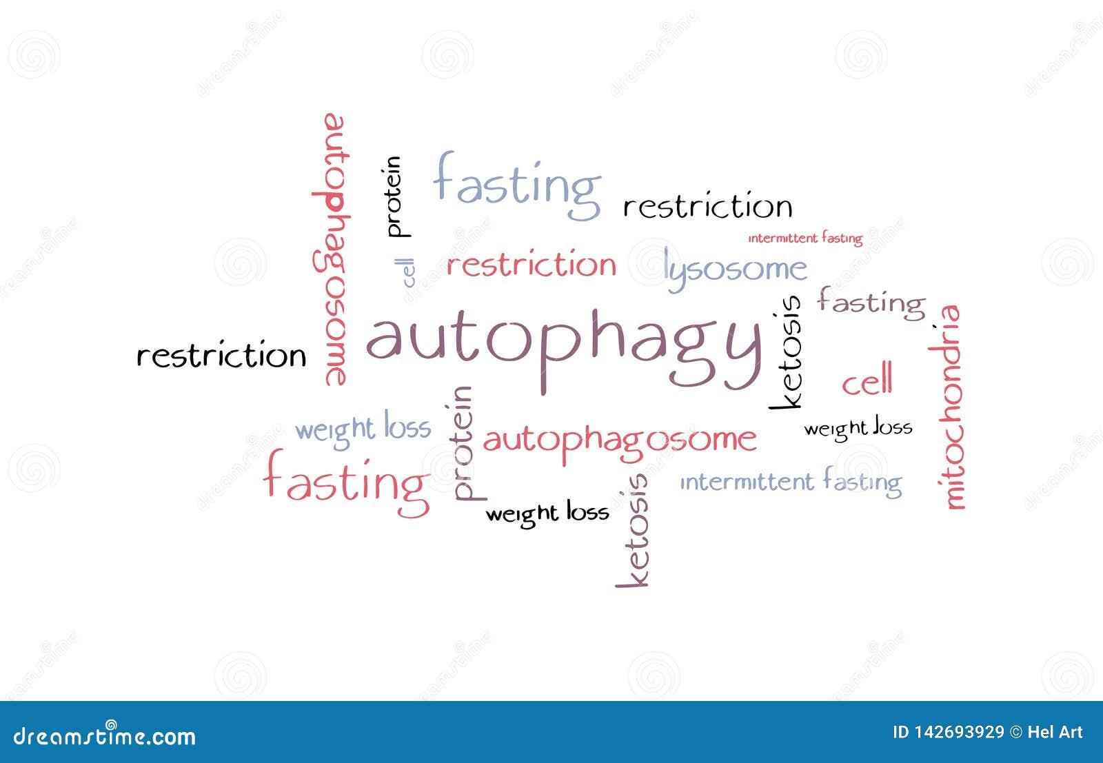Autophagy Stock Illustrations – 24 Autophagy Stock Illustrations