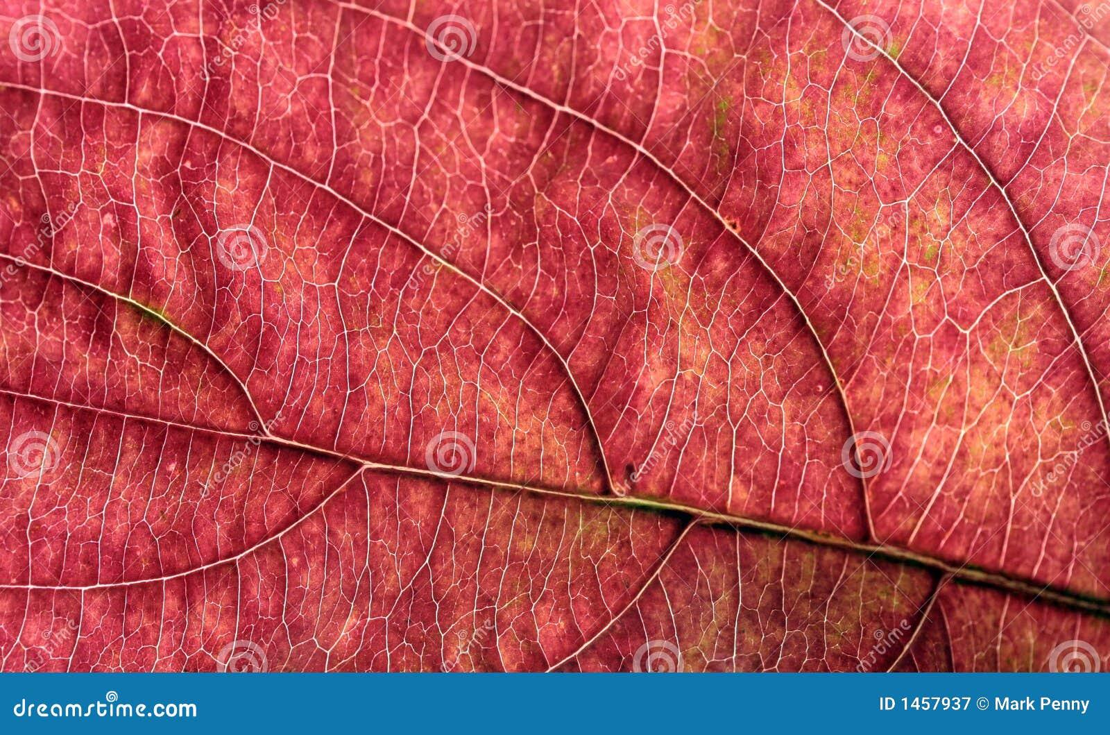 Autum Leaf Macro
