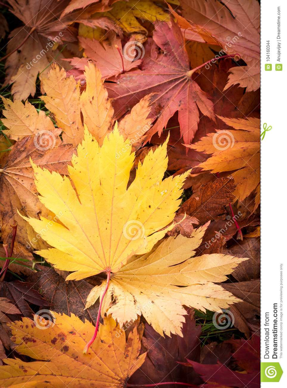 Autum Leaves Wallpaper Stock Photo Image Of Aussie 104160344