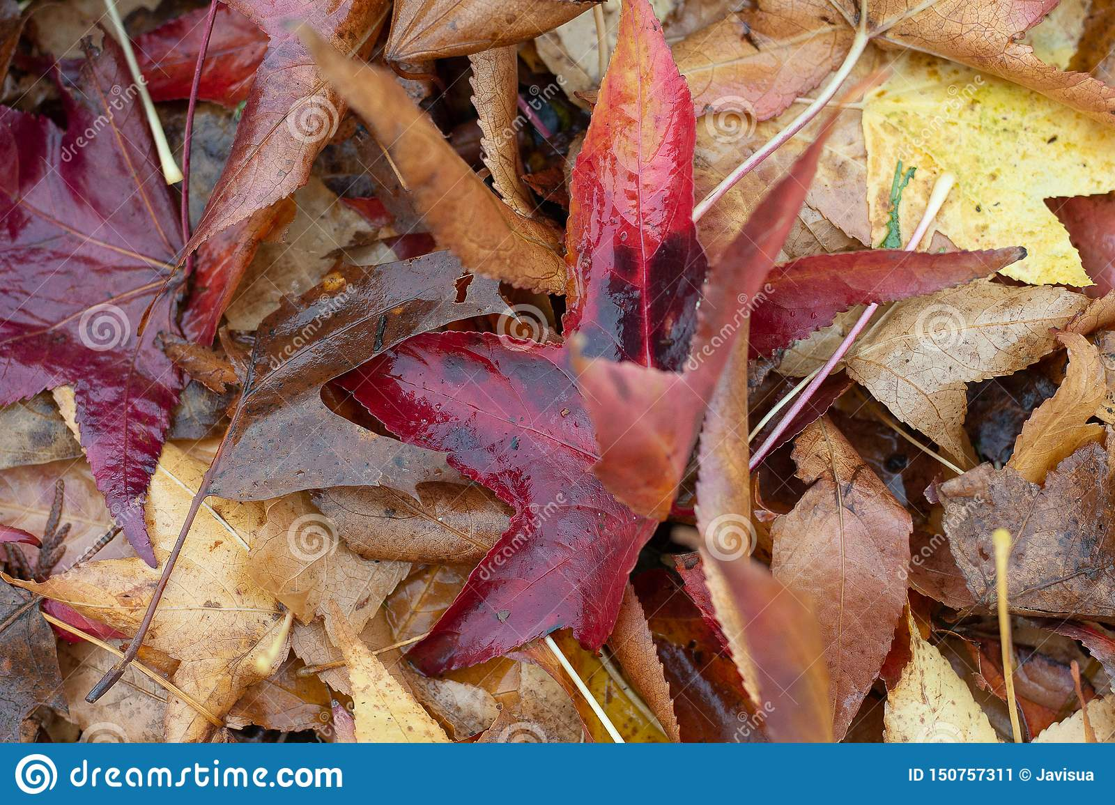 Autumm vient, les feuilles ont la chute